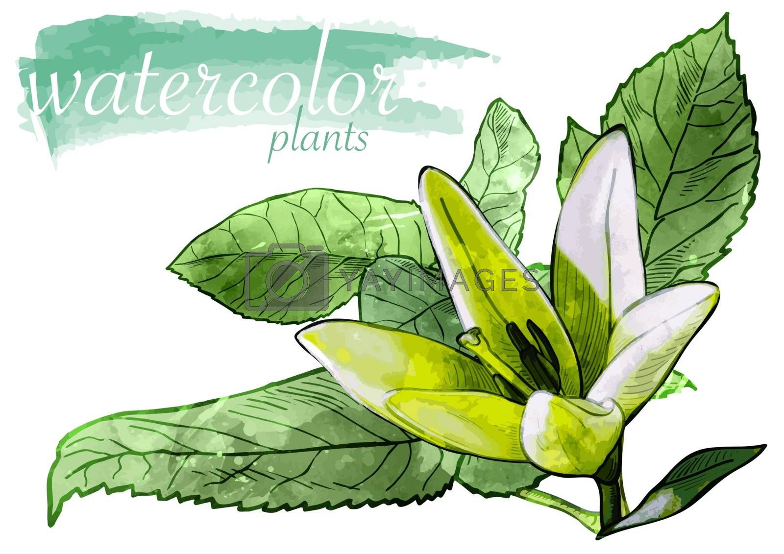 Green Watercolor Flower with Leafs by illustratorCZ