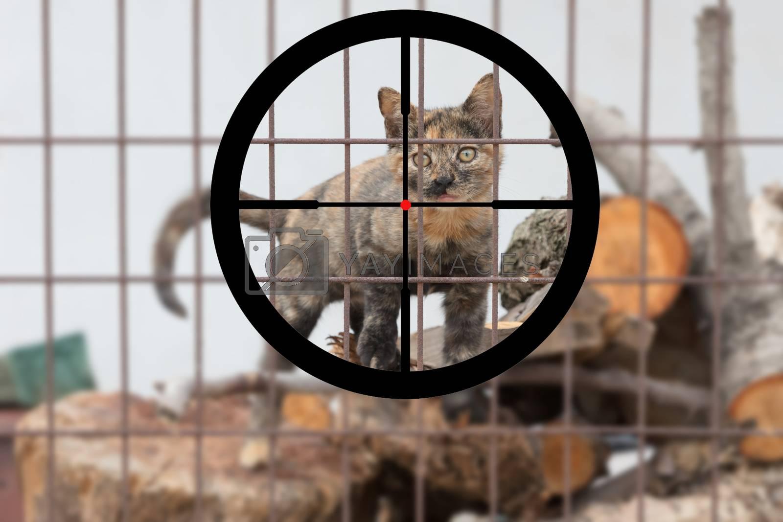 Hunting a cute homeless kitten in Greece by michaklootwijk