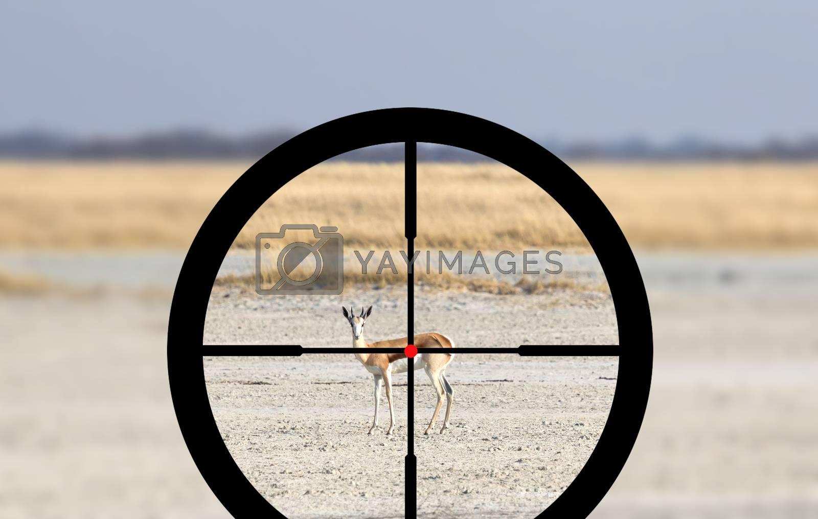 Hunting a Common Impala (Aepyceros melampus) by michaklootwijk