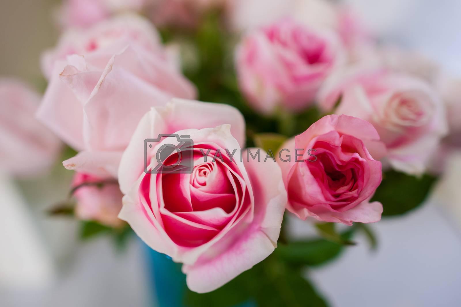 Bouquet of roses Pink Background blur Valentine by Sarayut