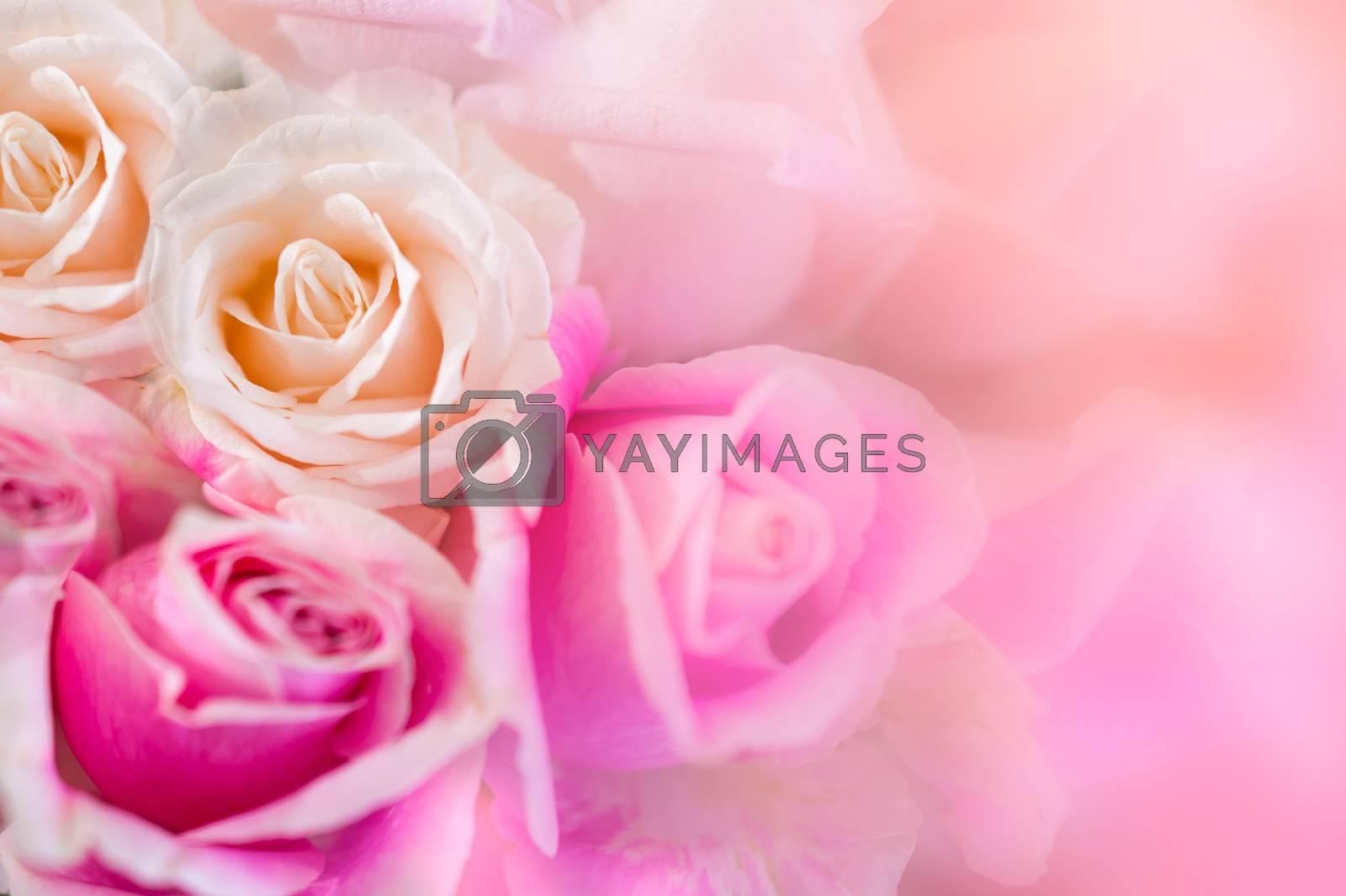 Pink roses Background blur Valentine by Sarayut