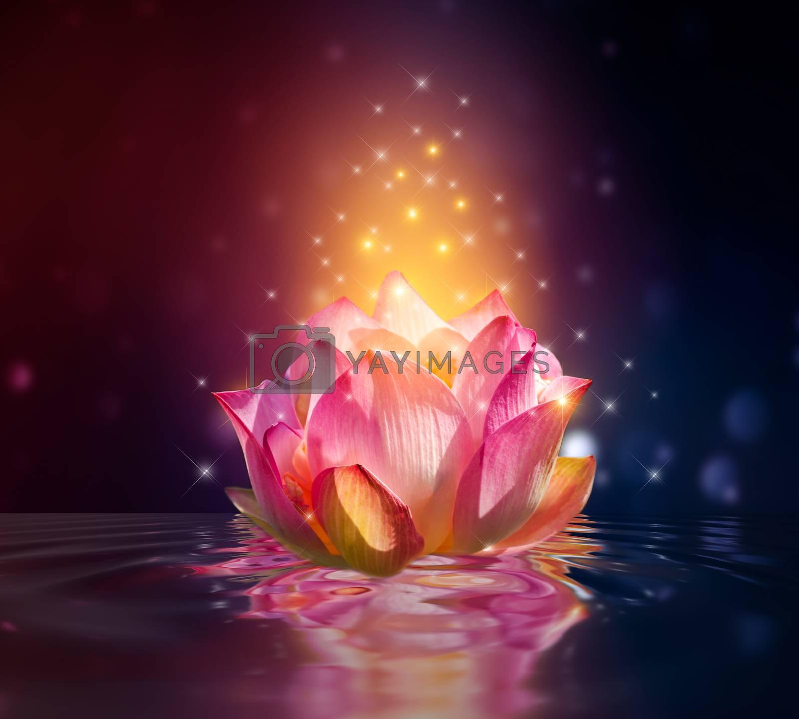 lotus Pink floating light sparkle purple background by Sarayut