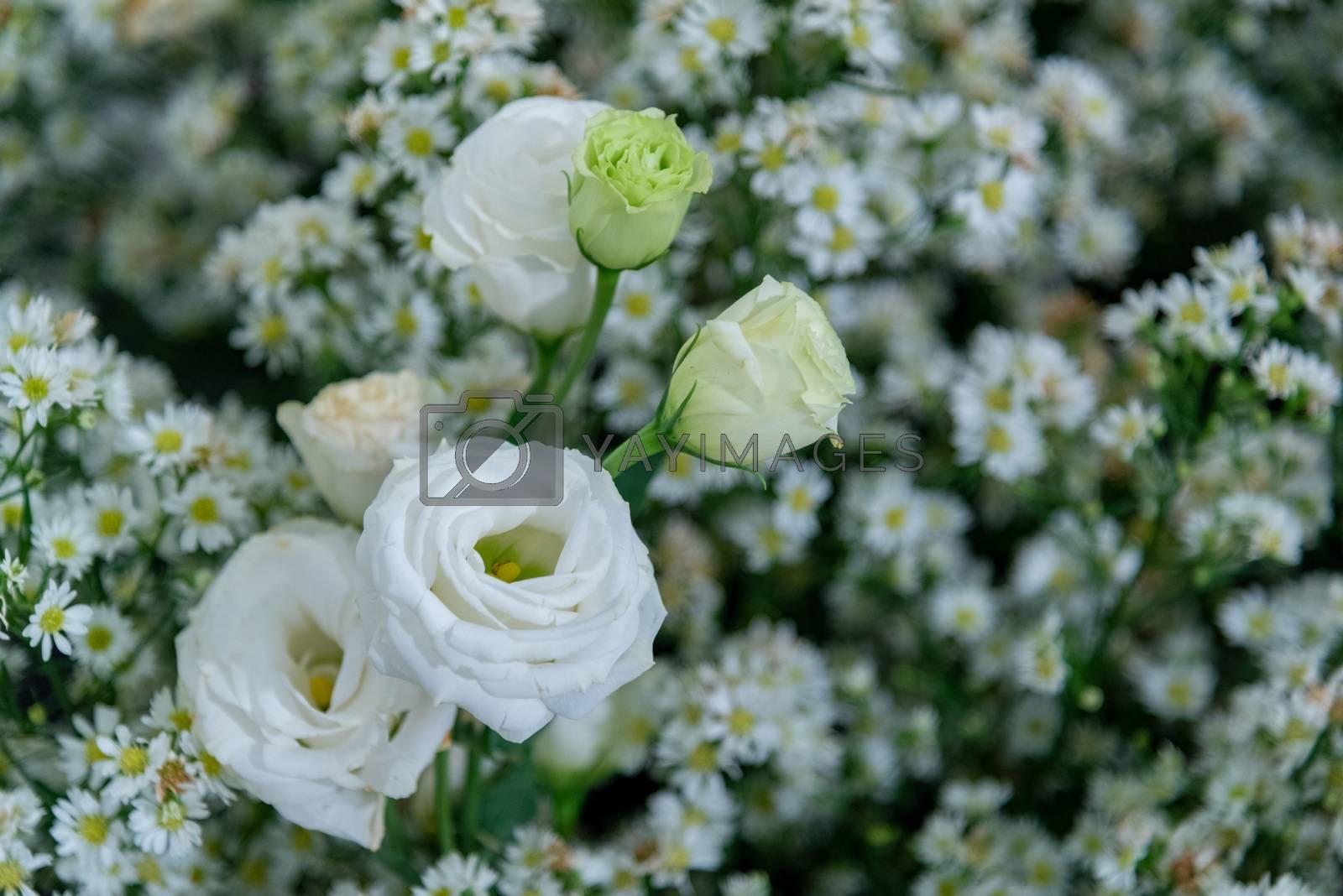 White flower by Sarayut