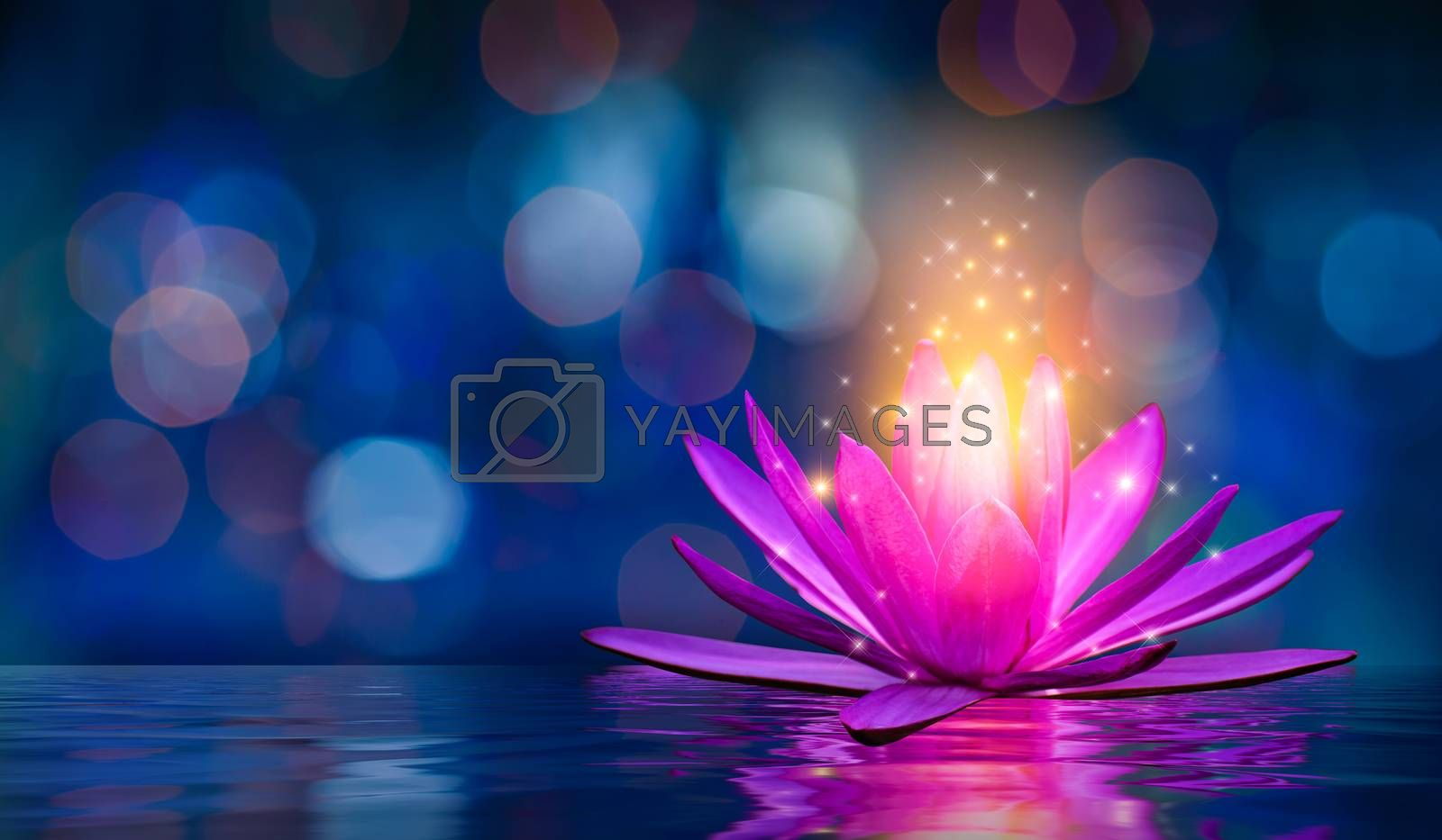 lotus Pink light purple floating light sparkle purple background by Sarayut