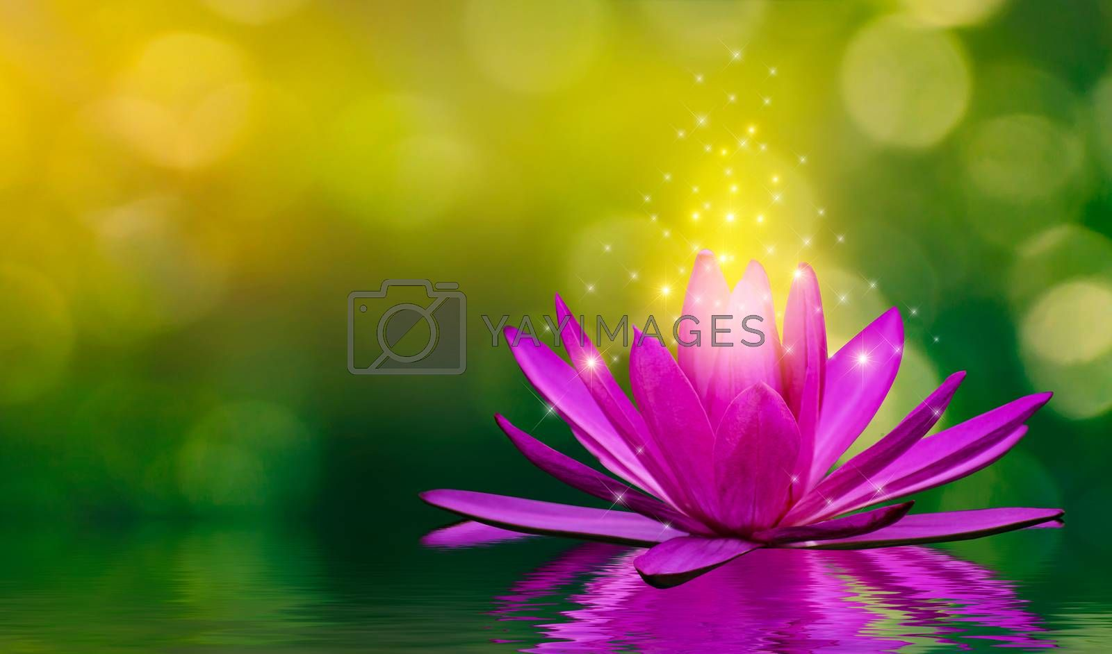 Purple lotus flowers emit light floating in the water, natural green bokeh background by Sarayut