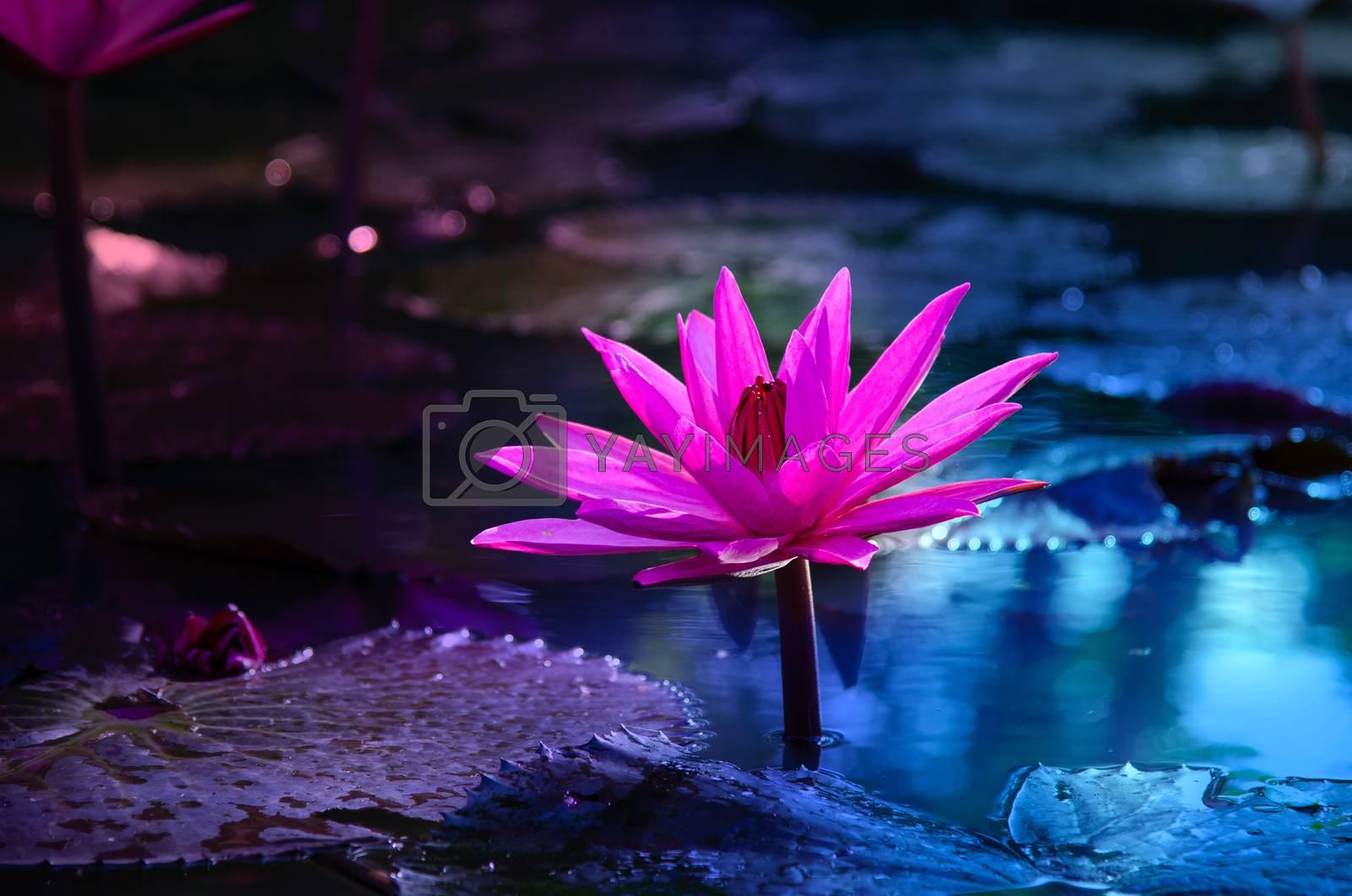lotus Pink light purple floating light sparkle purple background by Sarayut