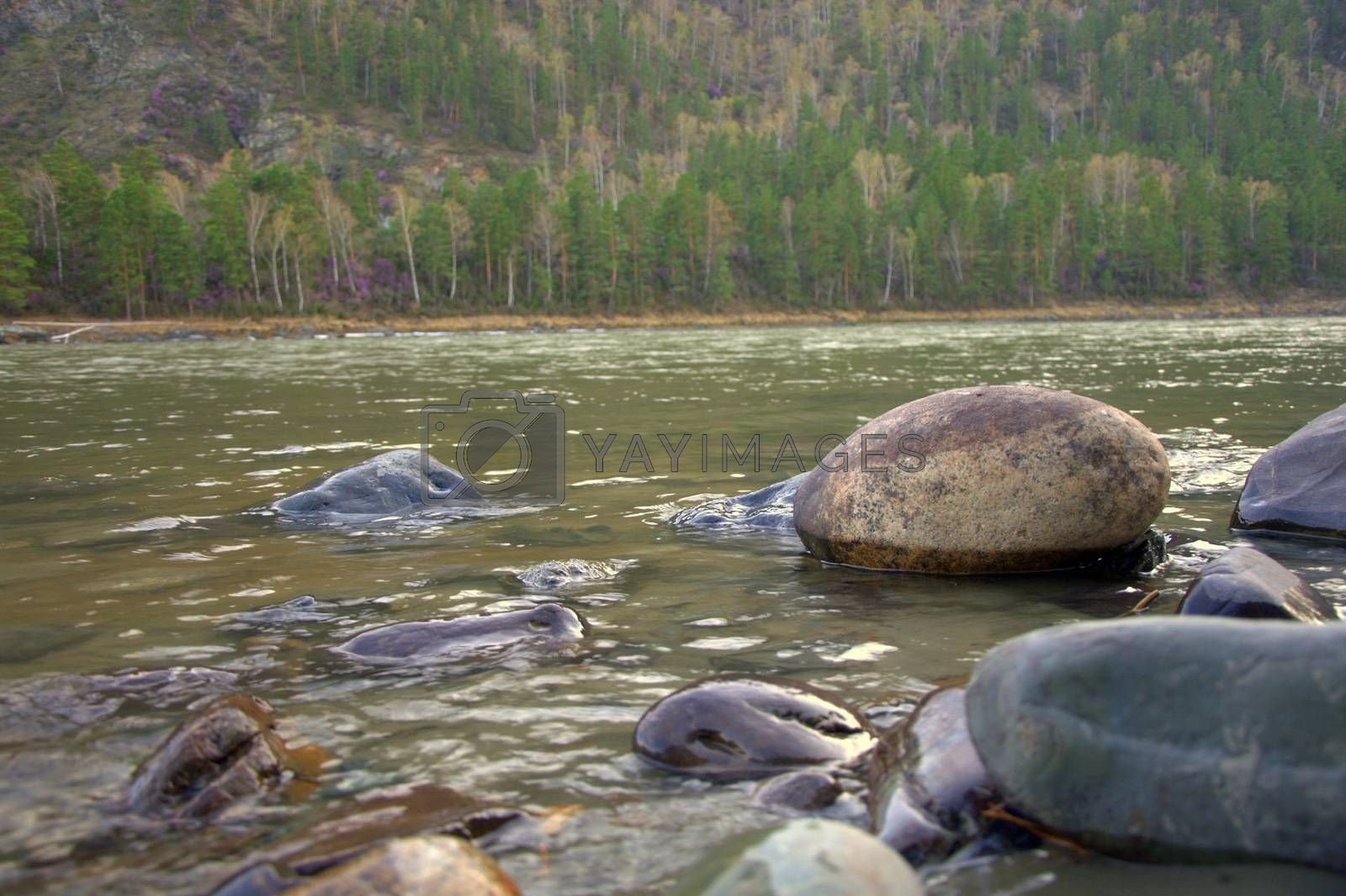 Stone boulders on the banks of the mountain river Katun. by Alex Yellow
