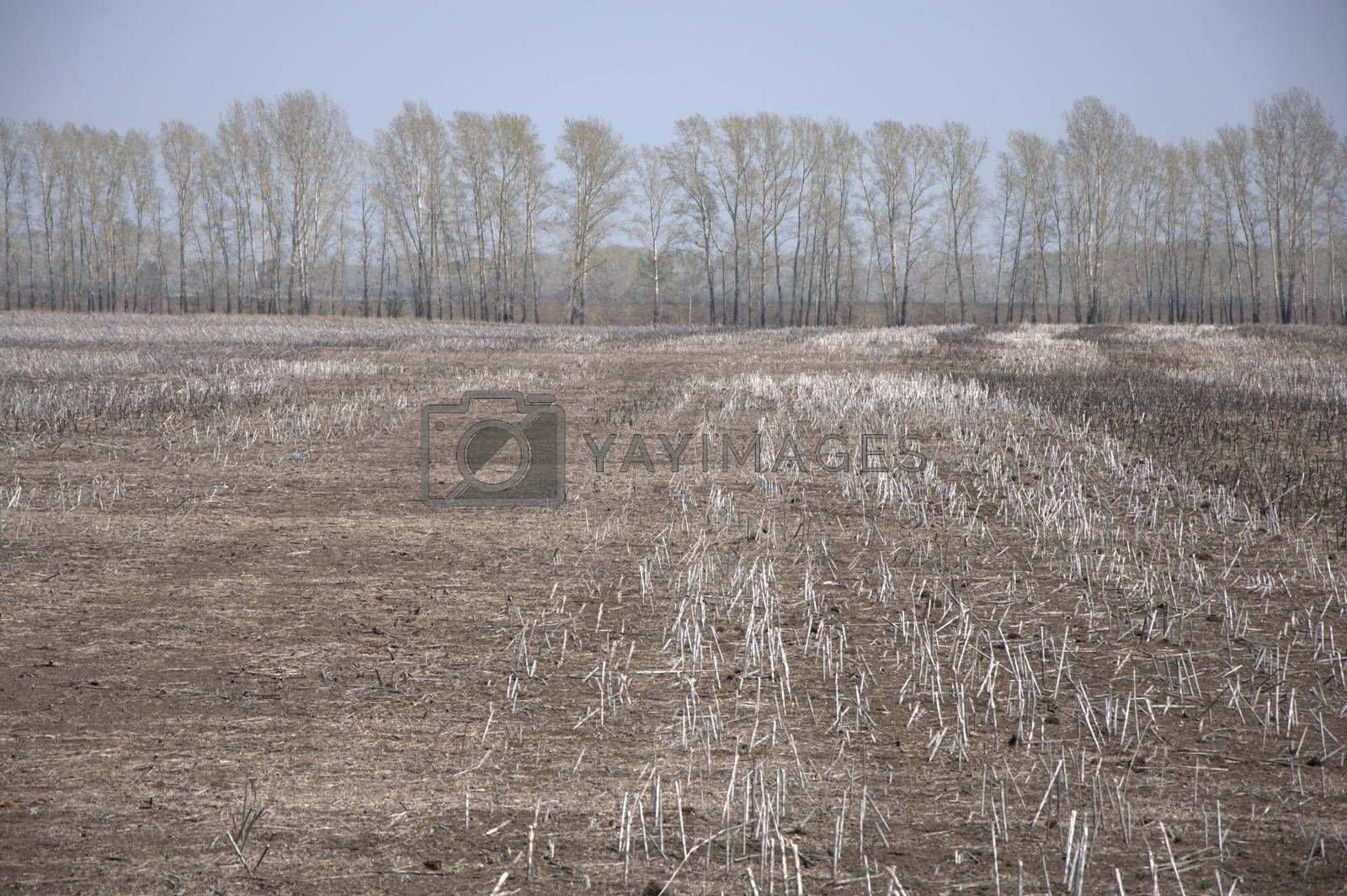 Freshly plowed field with the remnants of winter crops. Landscape. by Alex Yellow