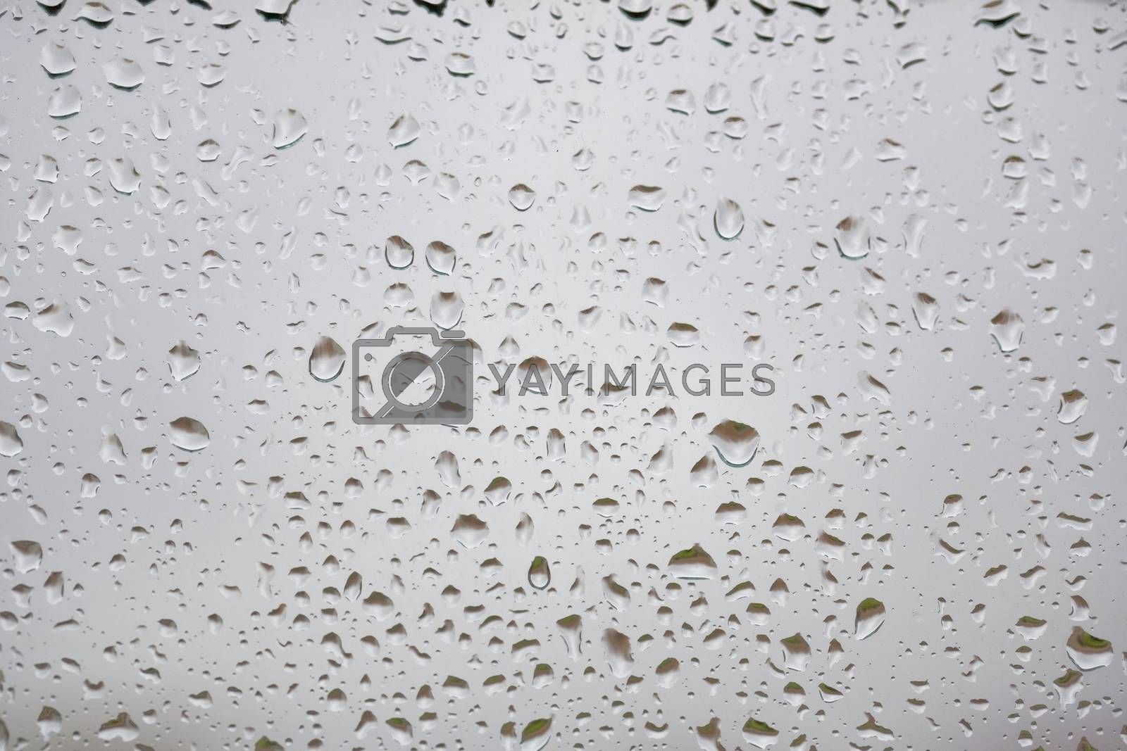 drops by zittto