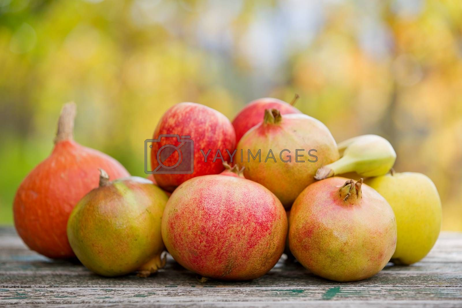 autumn fruits by zittto