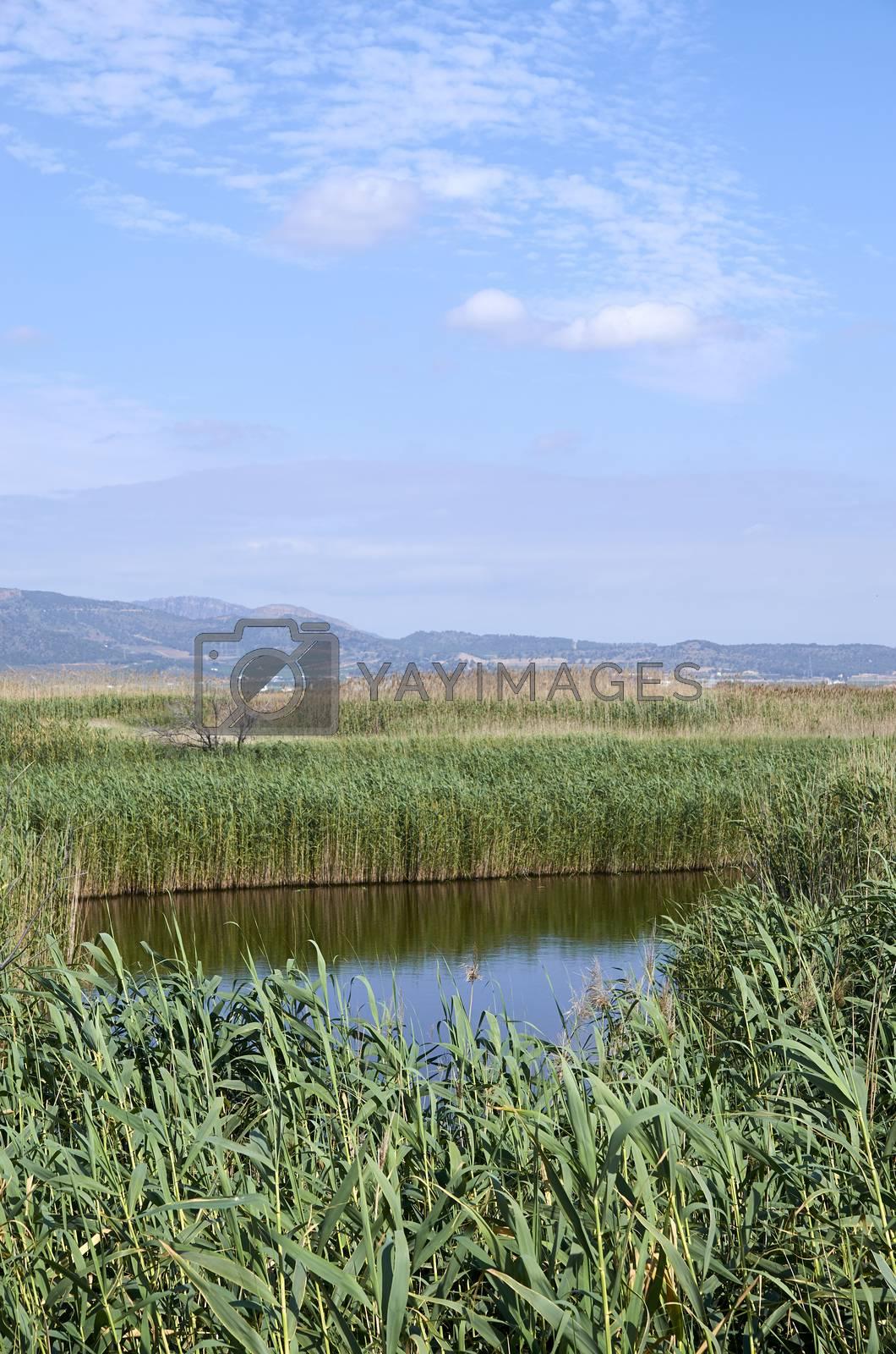 Ponds in Puzol Valencia by BPardoFotografia