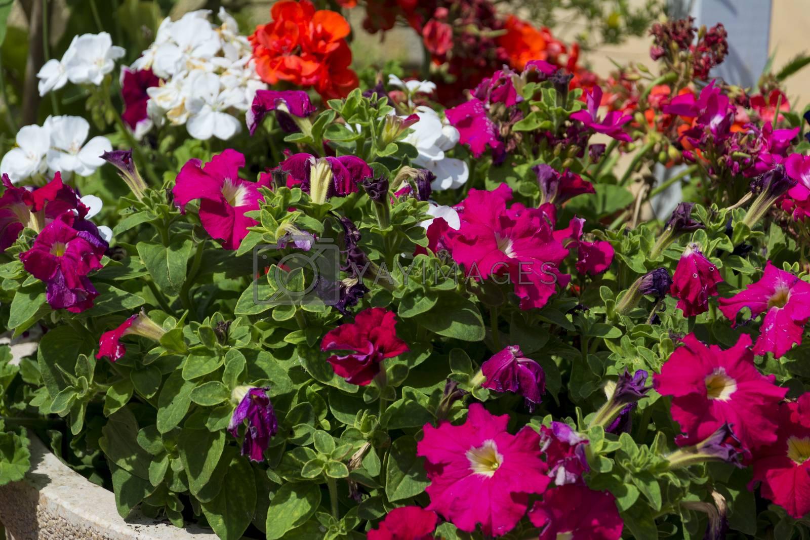 garden flowers by Prf_photo