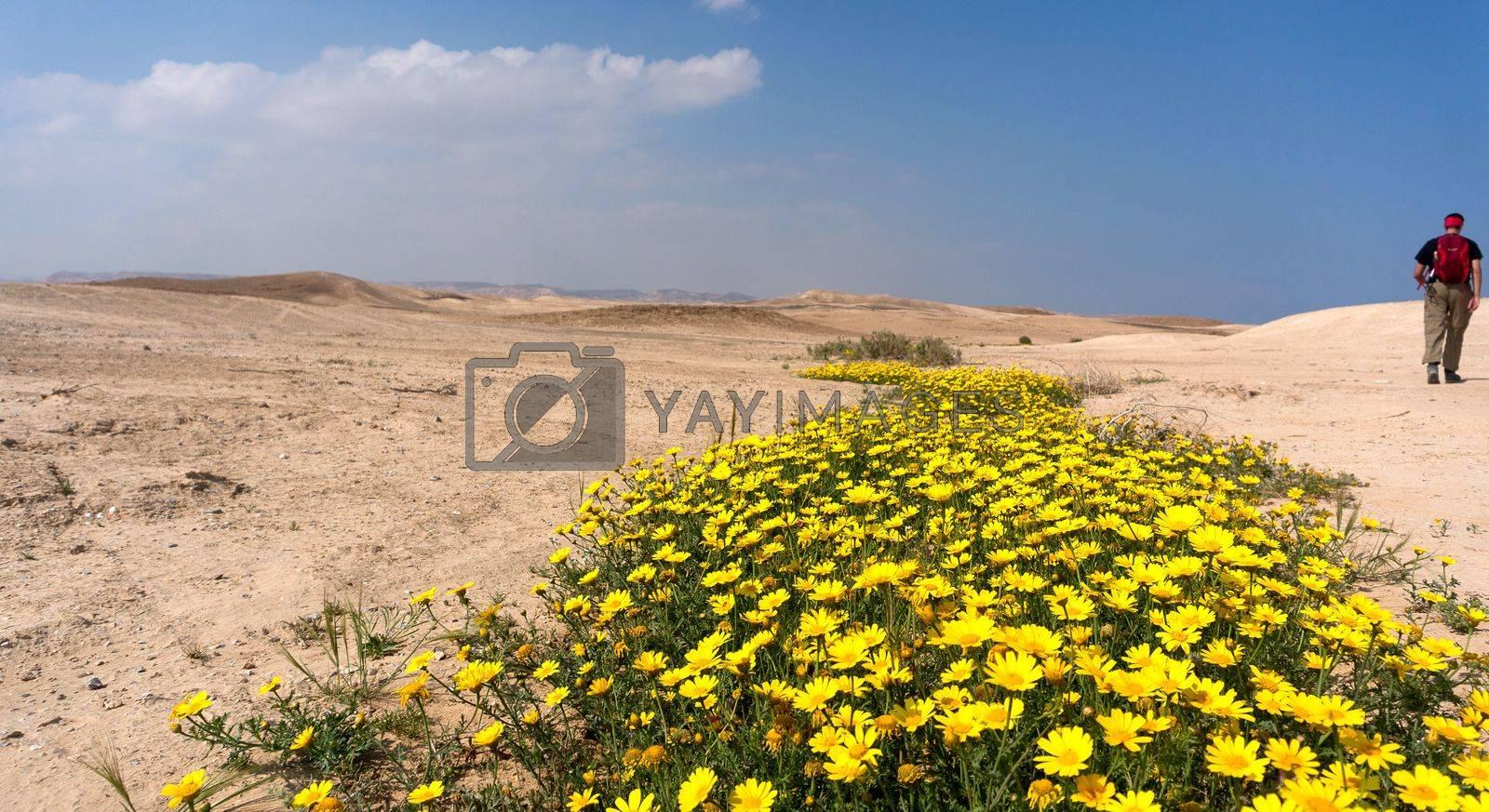 String in israeli negev desert by javax