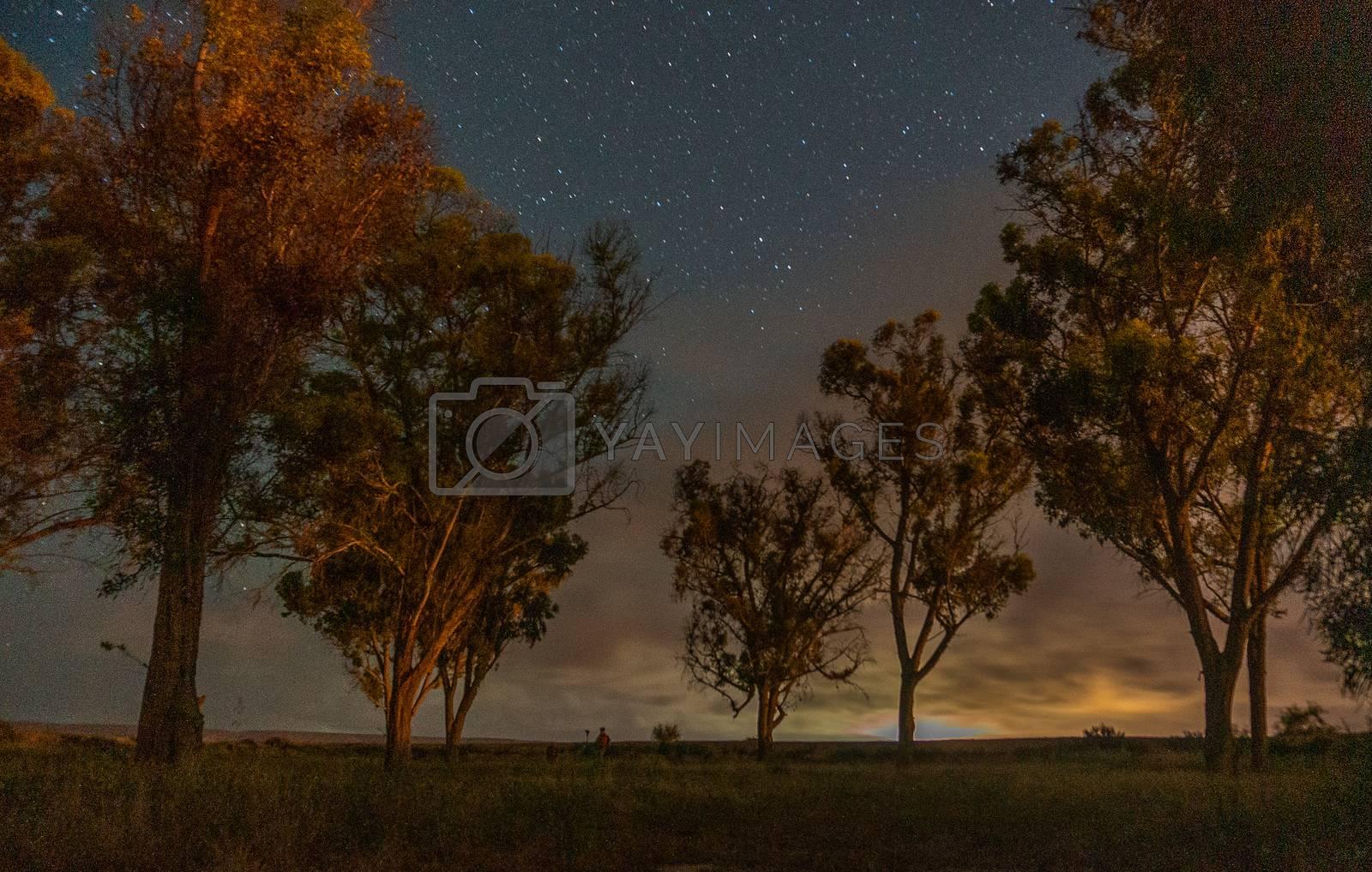 Trees under starts in israeli oasis desert by javax