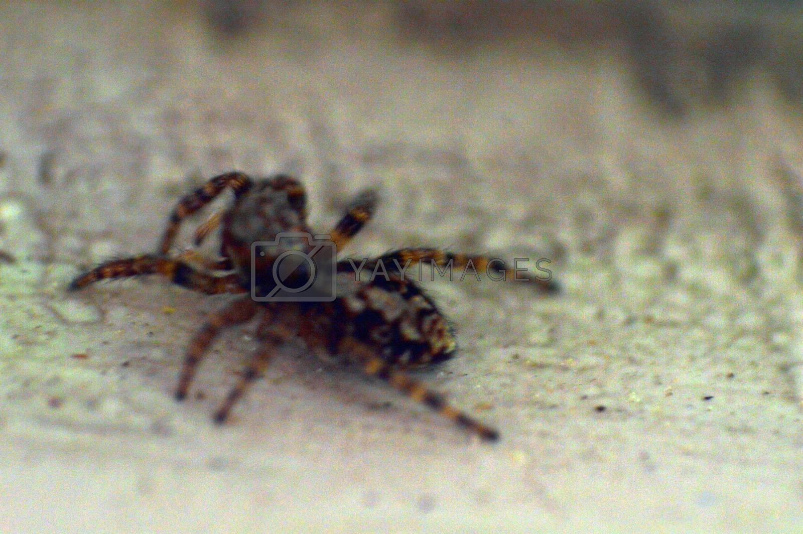 Spider on the windowsill macro photo by Prokopenko