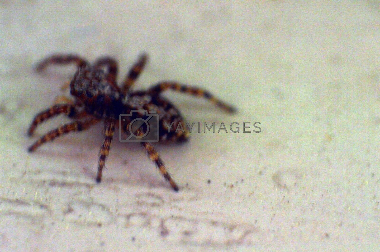 Spider on the windowsill macro photo by Prokopenko