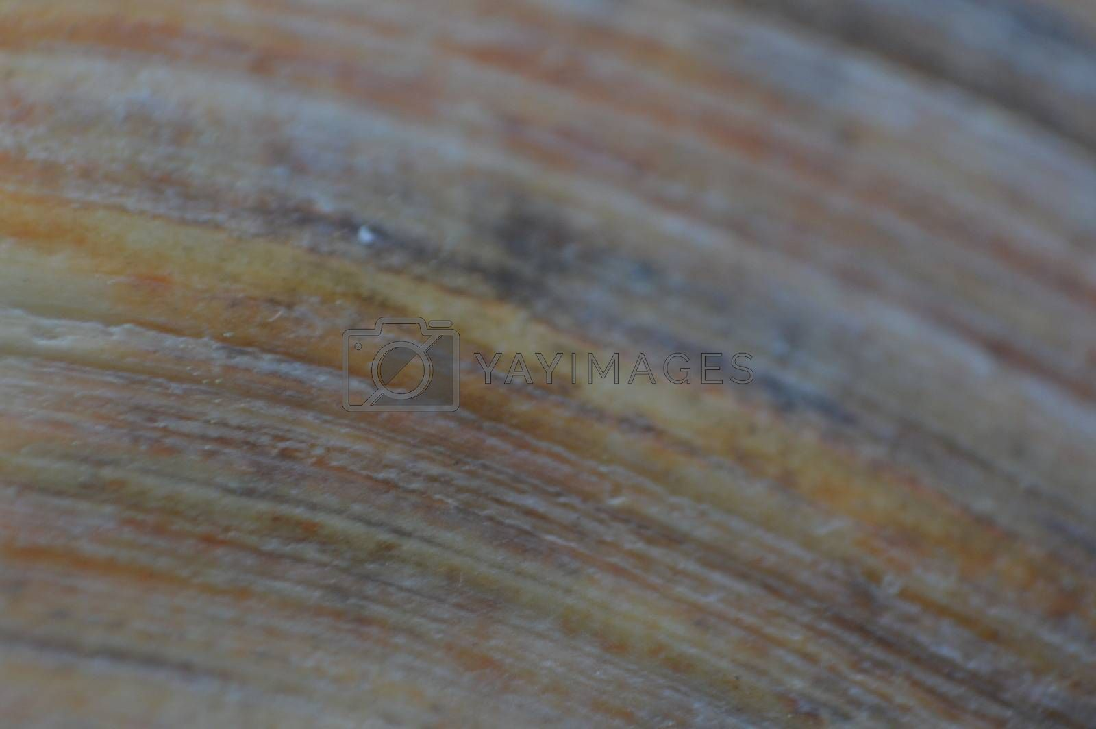 Texture of seashells from the sea and ocean macro photo by Prokopenko