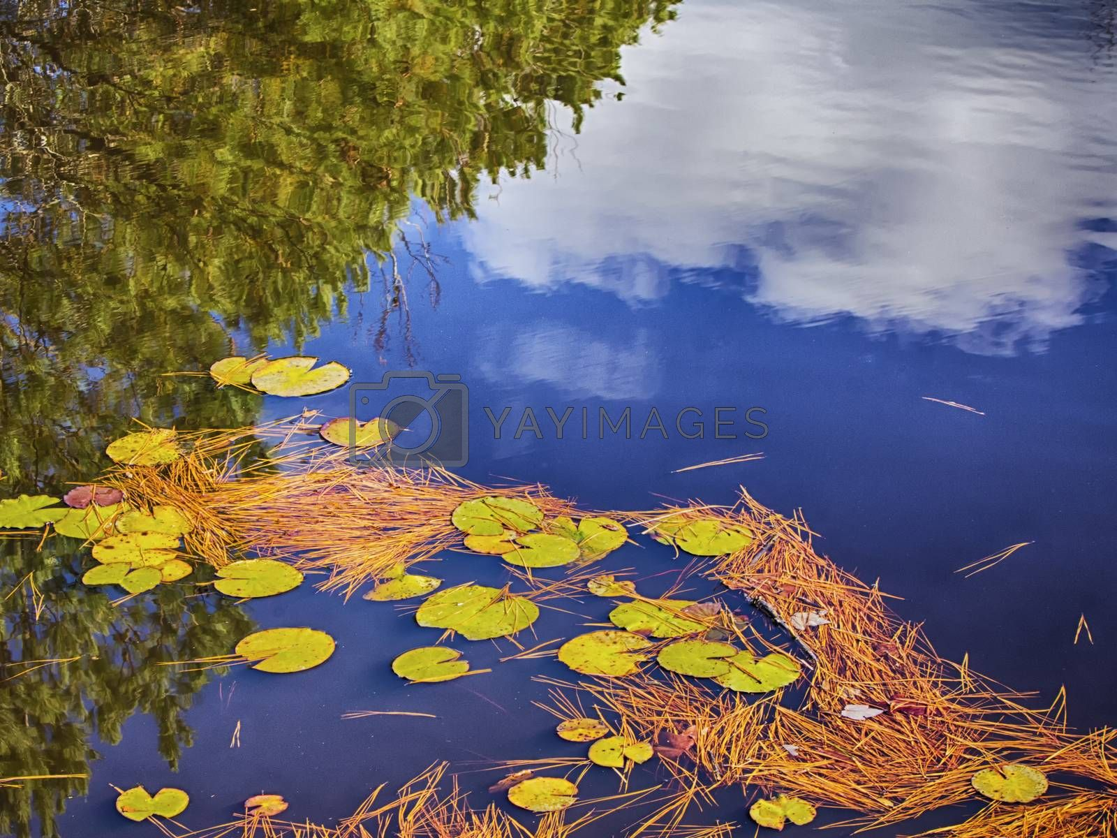 Reflections in a small lily pond by Charlie Floyd