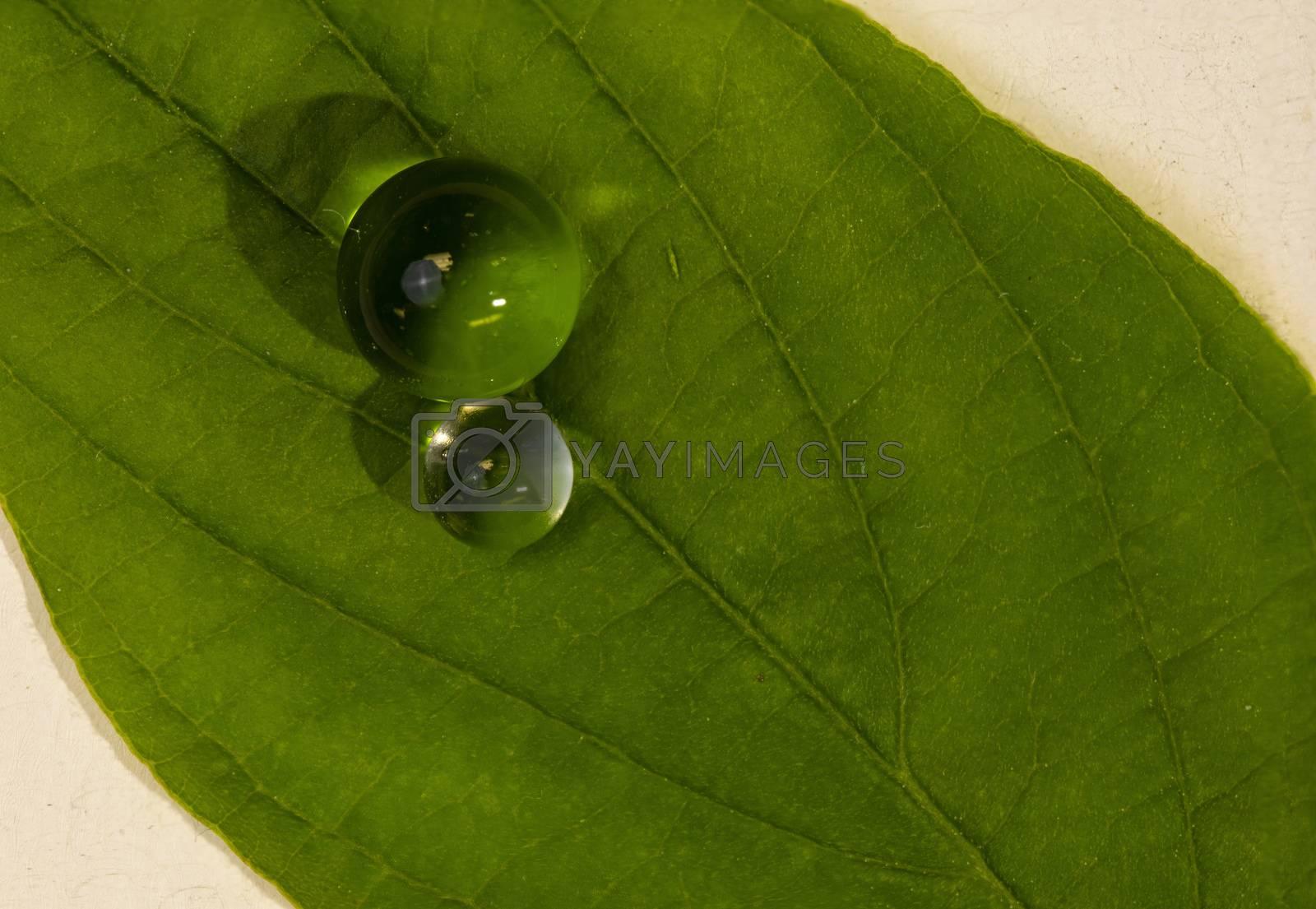 Water Balls on Green Leaf by Charlie Floyd