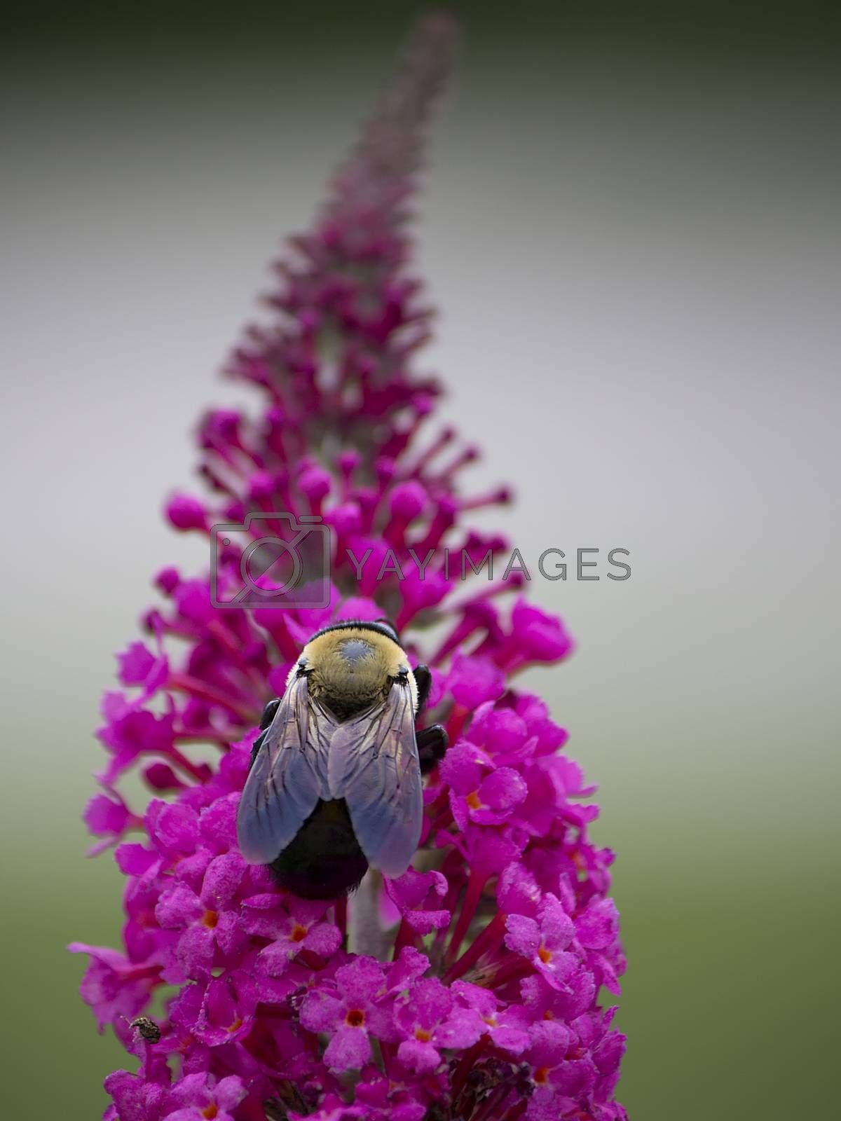 Bee Feeding on Blooms by Charlie Floyd