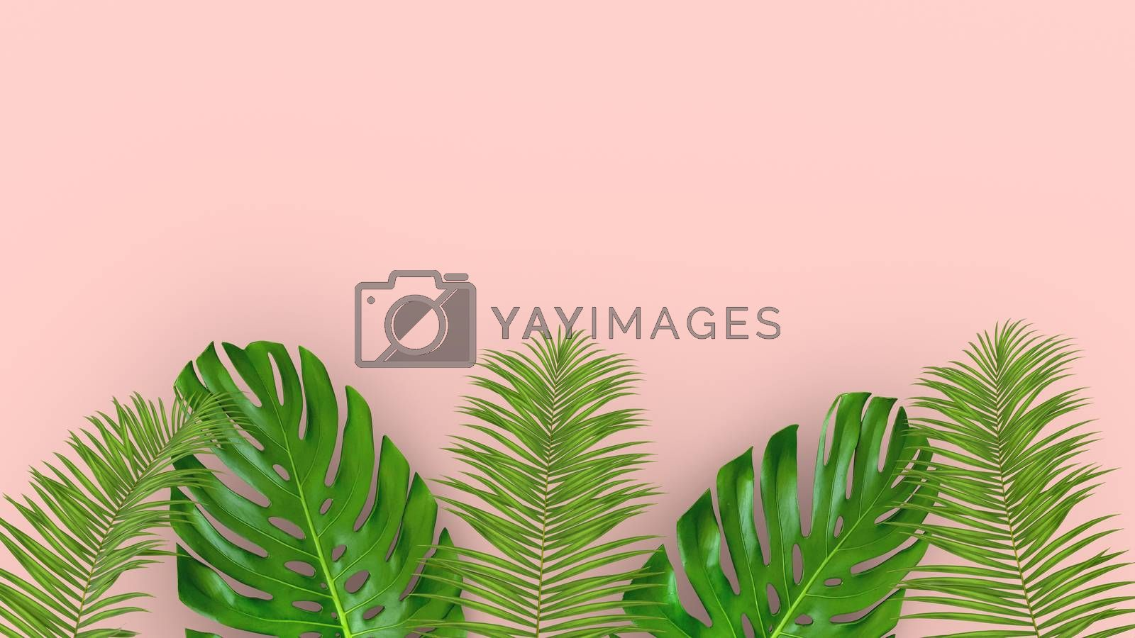 3D render of realistic palm leaves on pink background for cosmetic ad or fashion illustration. Tropical frame exotic banana palm. Sale banner design.