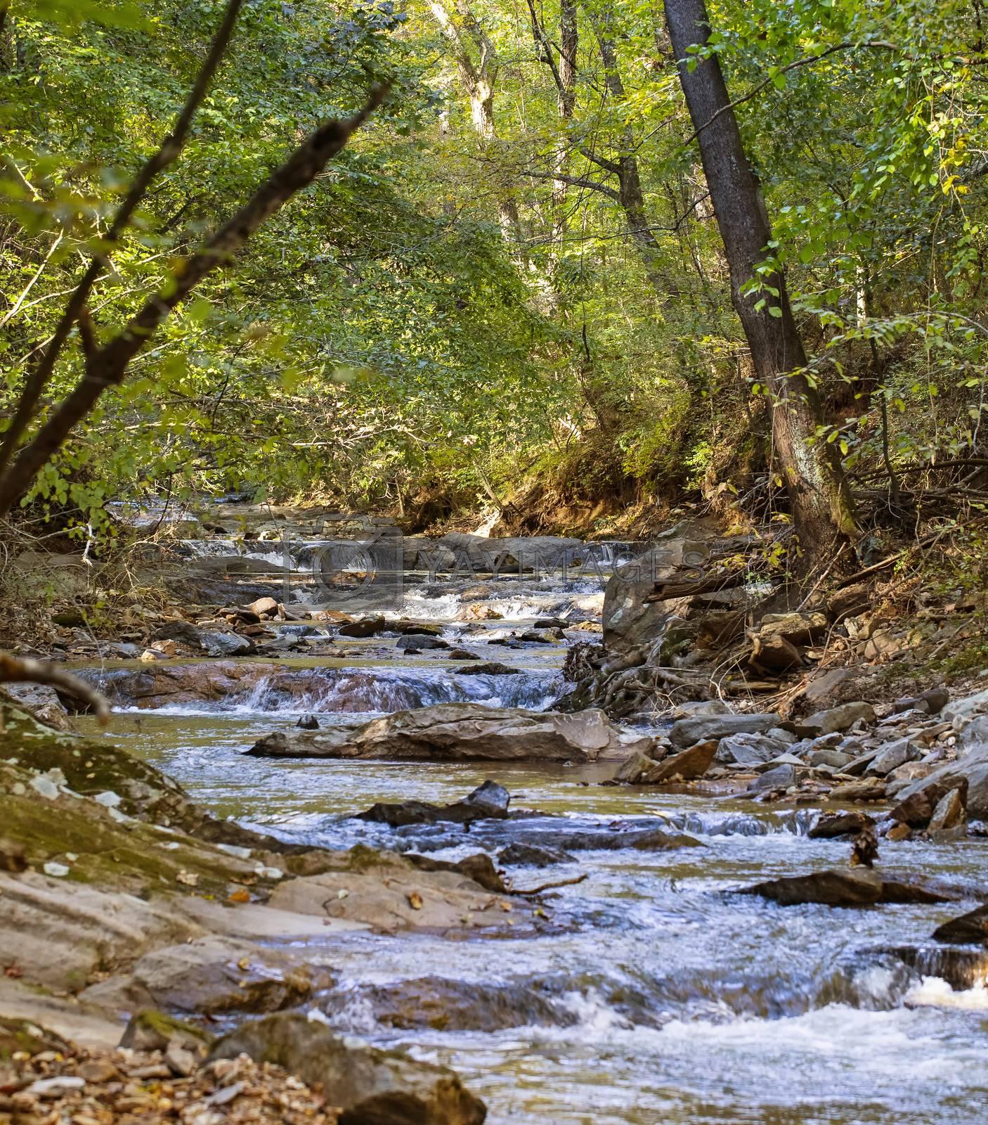 Fish Dam Creek Ripples Through Woodlands by Charlie Floyd