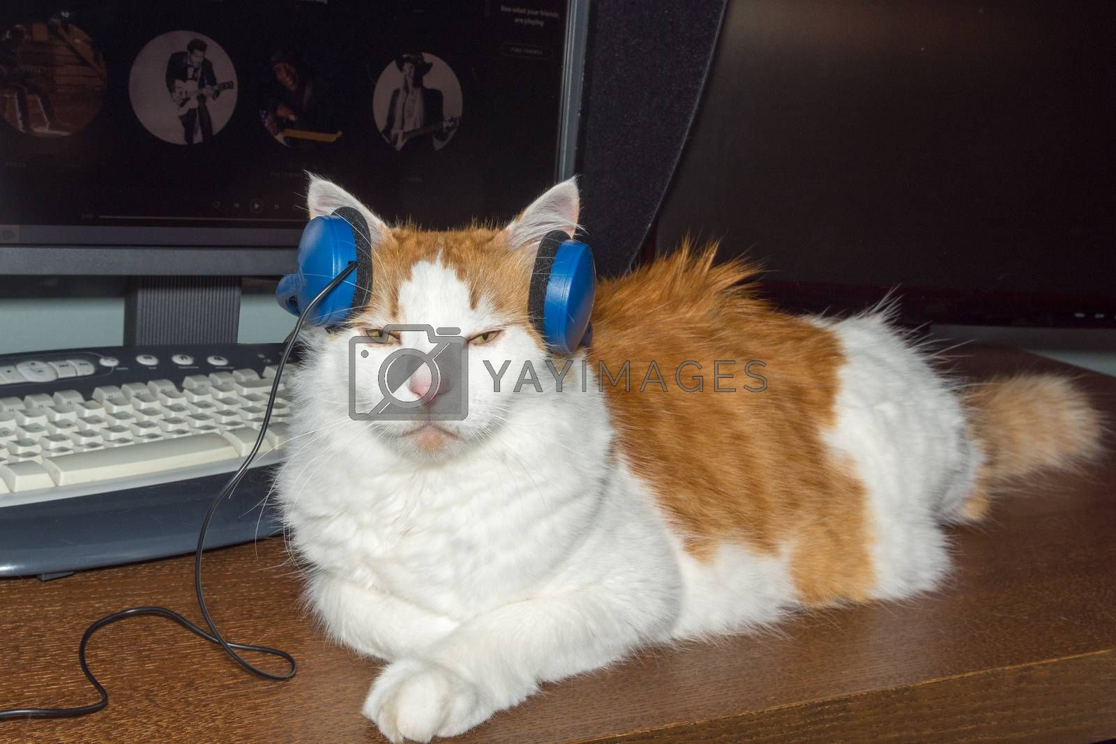 White cat with red spots likes to listen to music by ben44