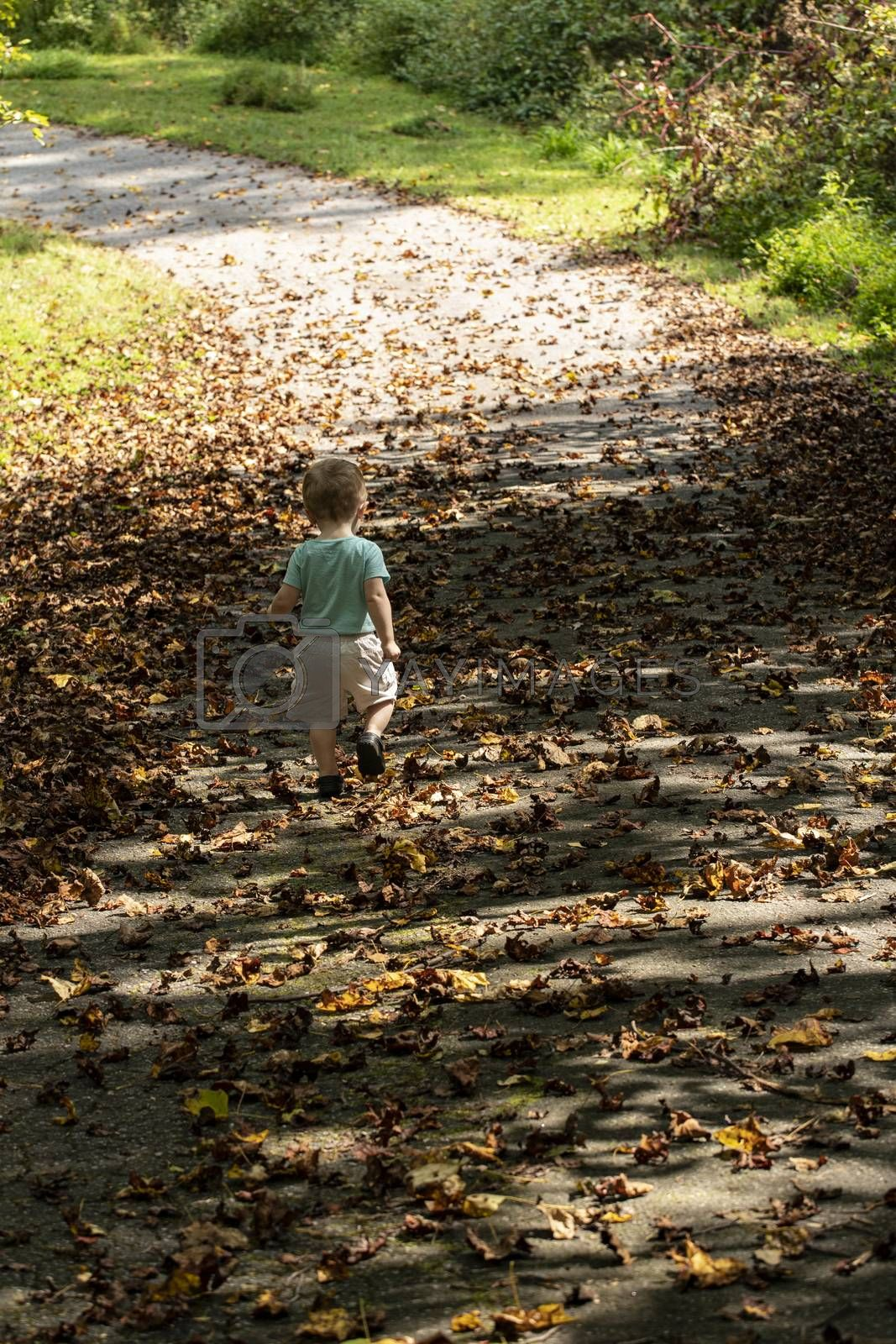 Male toddler walks down drive strewn with fall leaves. Seen from behind.