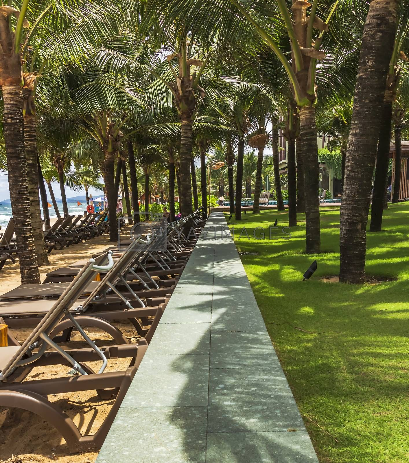 Row of beach deckchairs under coconut palm trees on a hot sunny day