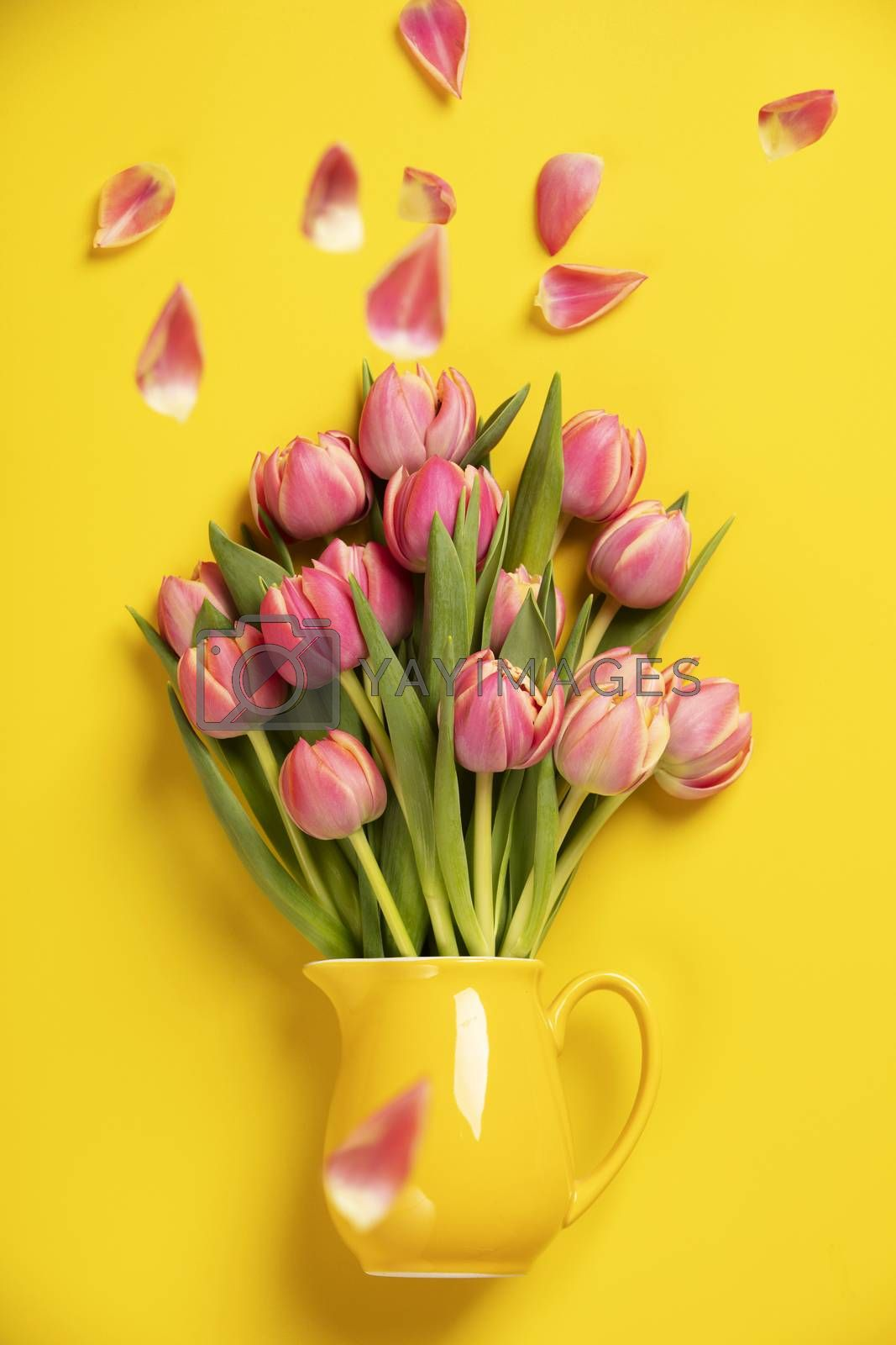 Fresh pink tulips in a jug, close up by klenova