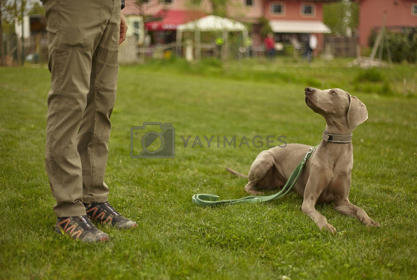 Dog looks at the master who calls his attention