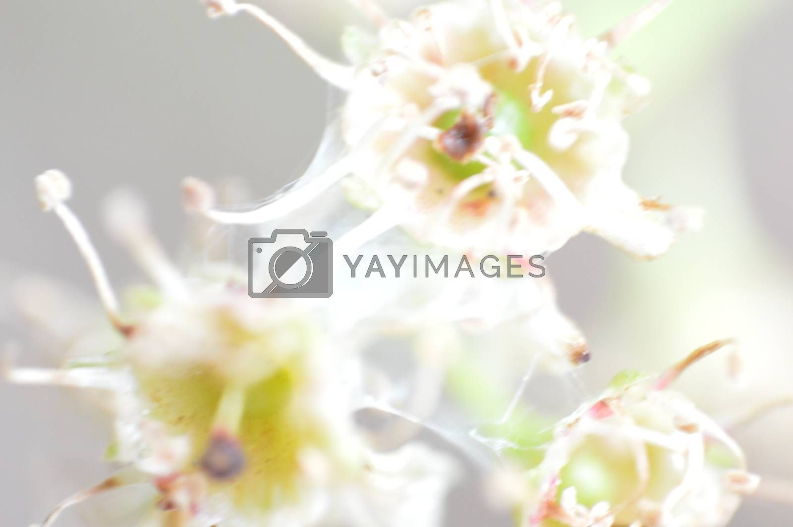 Macro shooting of plants and flowers in the forest