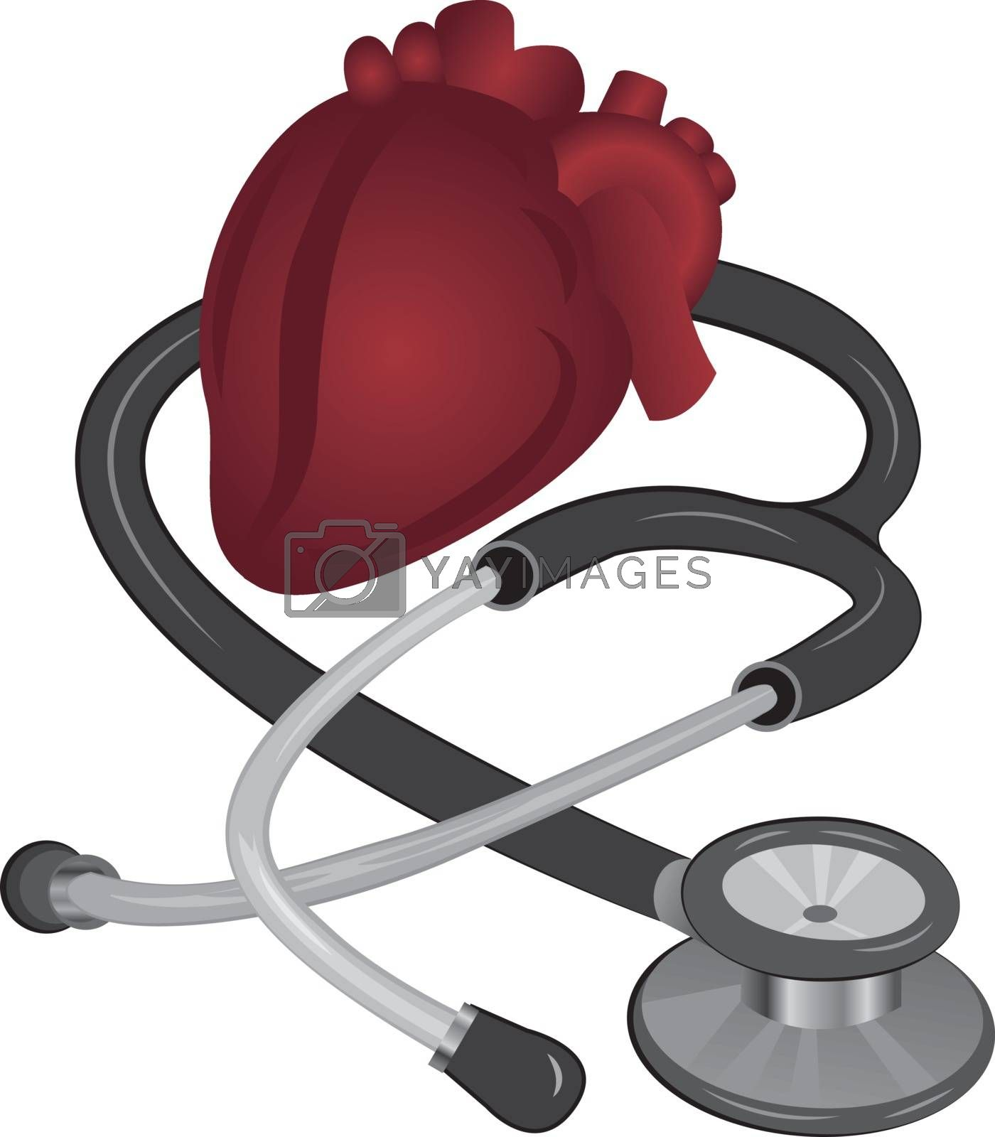 Heart and STETHOSCOPE Cardiovascular vector illustration   isolated on a white background