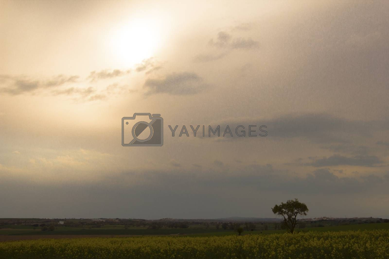 Tree alone behind a field of soy in bloom and cloudy sky near Pons in Catalunya