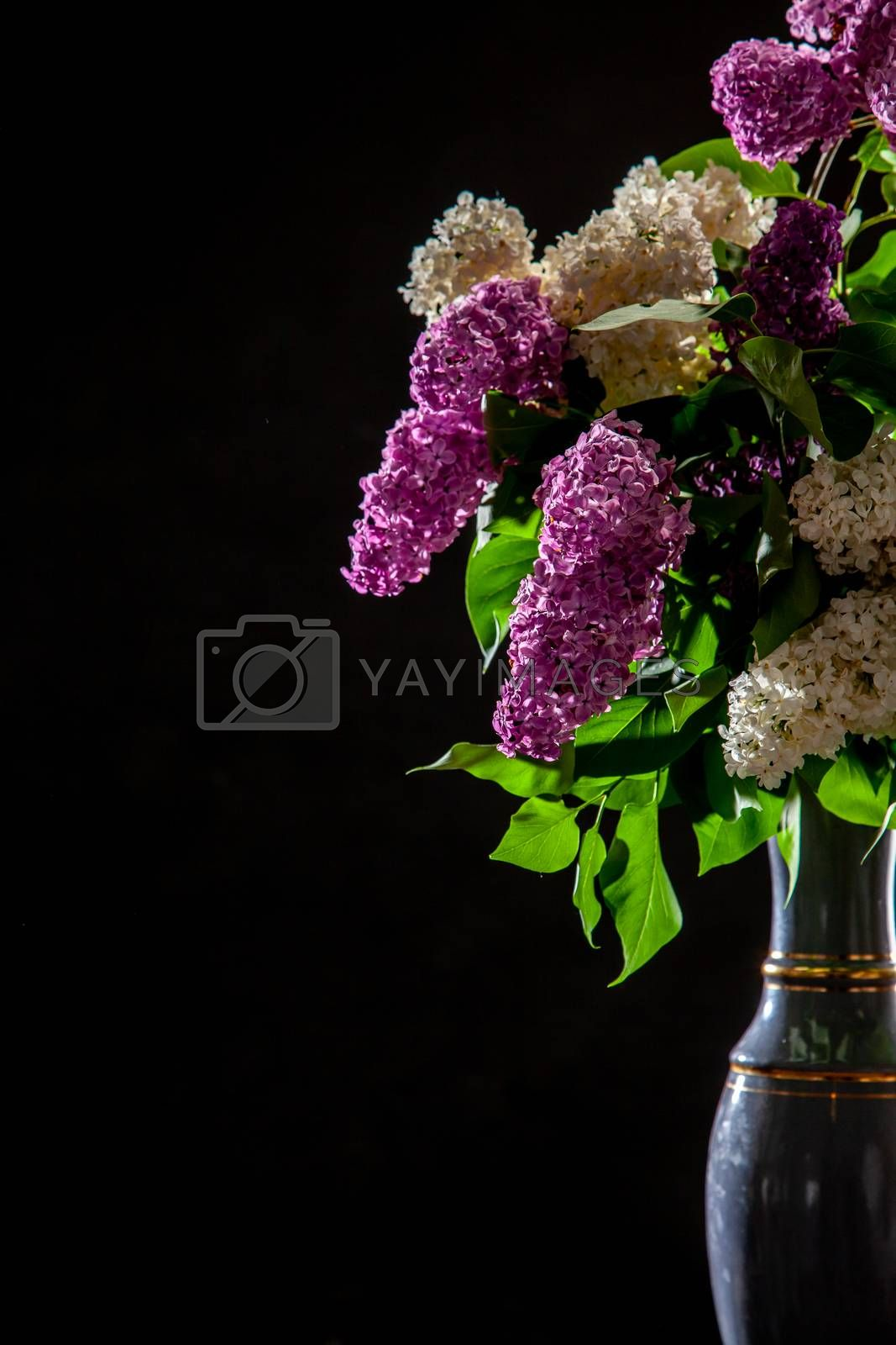 White and purple branches of lilac in vase on black background. Spring branch of blooming lilac on the black background.