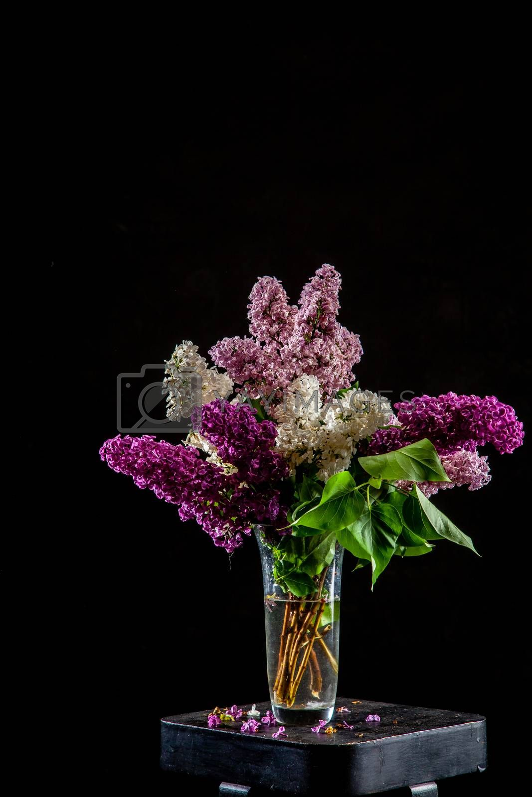 White and purple branches of lilac in glass vase on black background. Spring branch of blooming lilac on the table with black background. Fallen lilac flowers on the table.