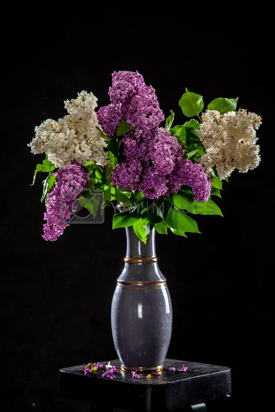 White and purple branches of lilac in vase on black background. Spring branch of blooming lilac on the table with black background. Fallen lilac flowers on the table.