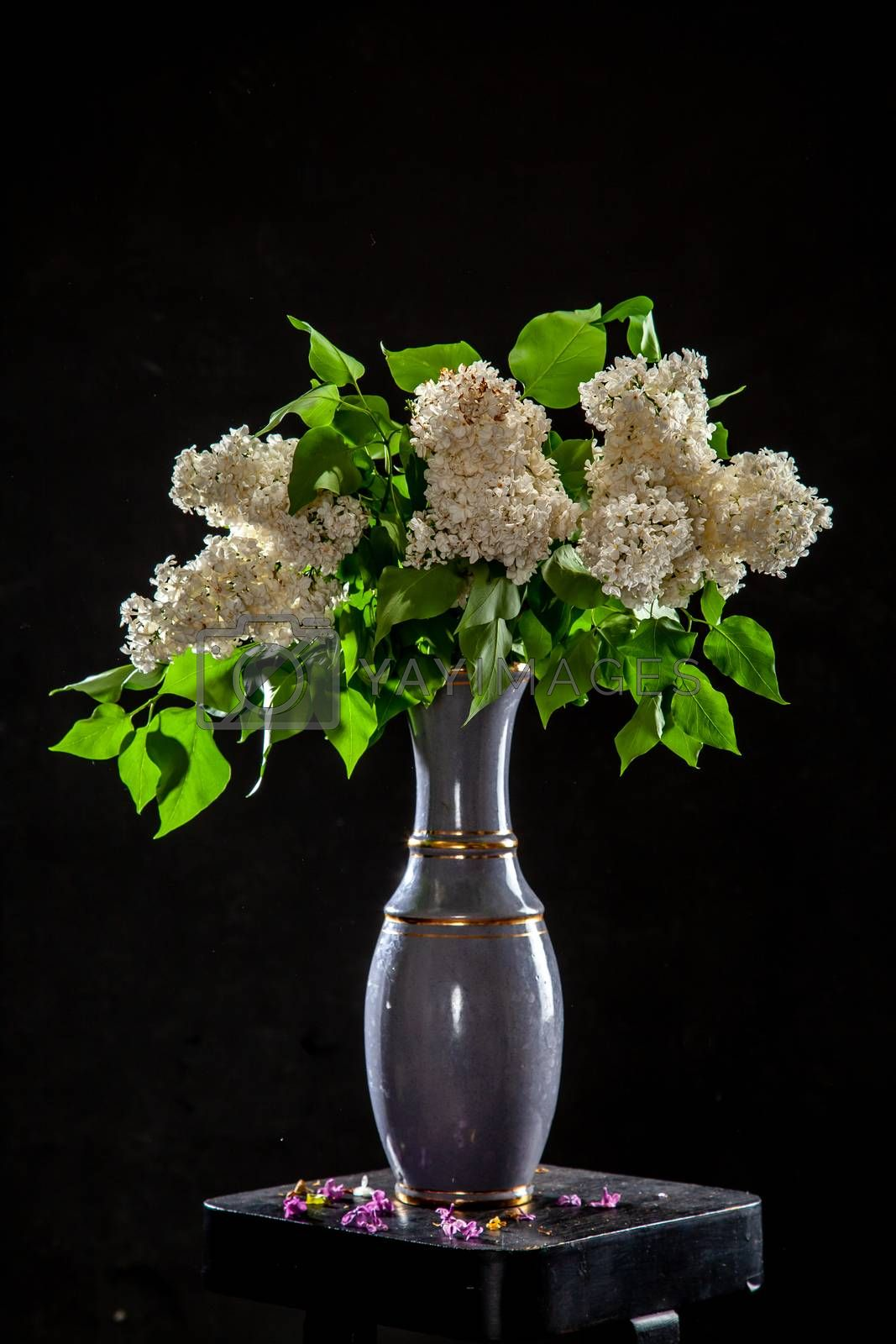 White branches of lilac in vase on black background. Spring branch of blooming lilac on the table with black background. Fallen lilac flowers on the table.