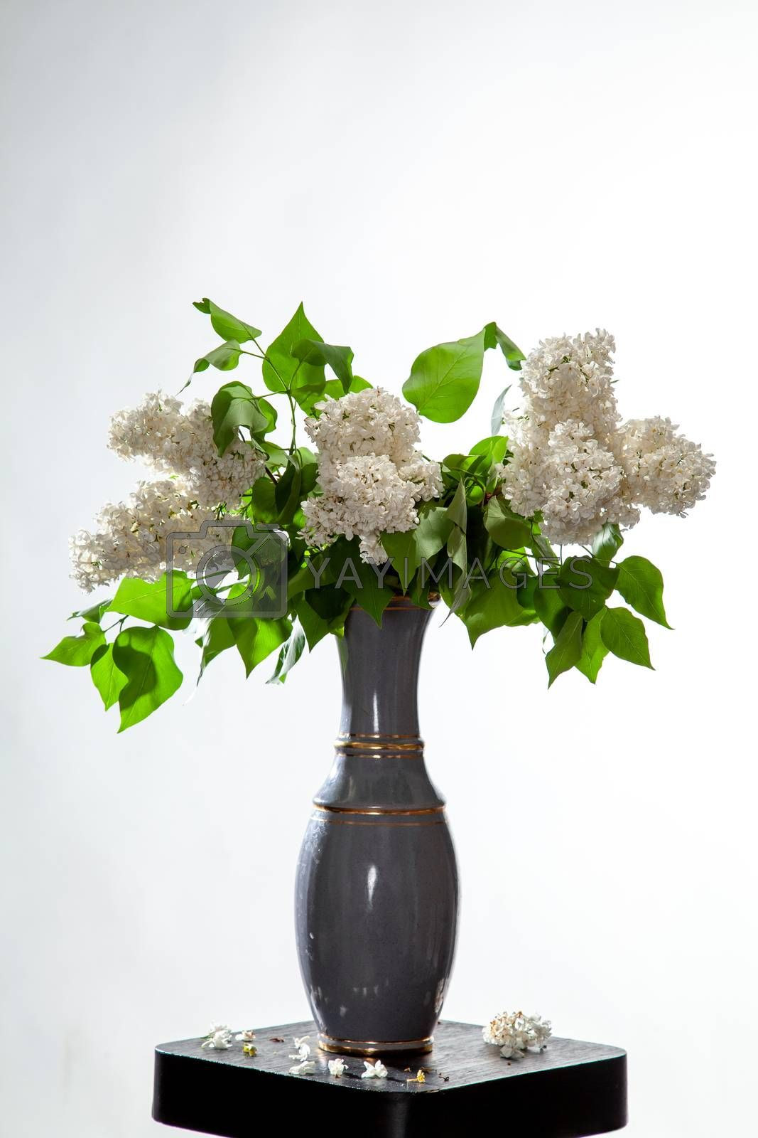 Branches of white lilac in vase on bwhite background. Spring branch of blooming lilac on the table with white background. Fallen lilac flowers on the table.