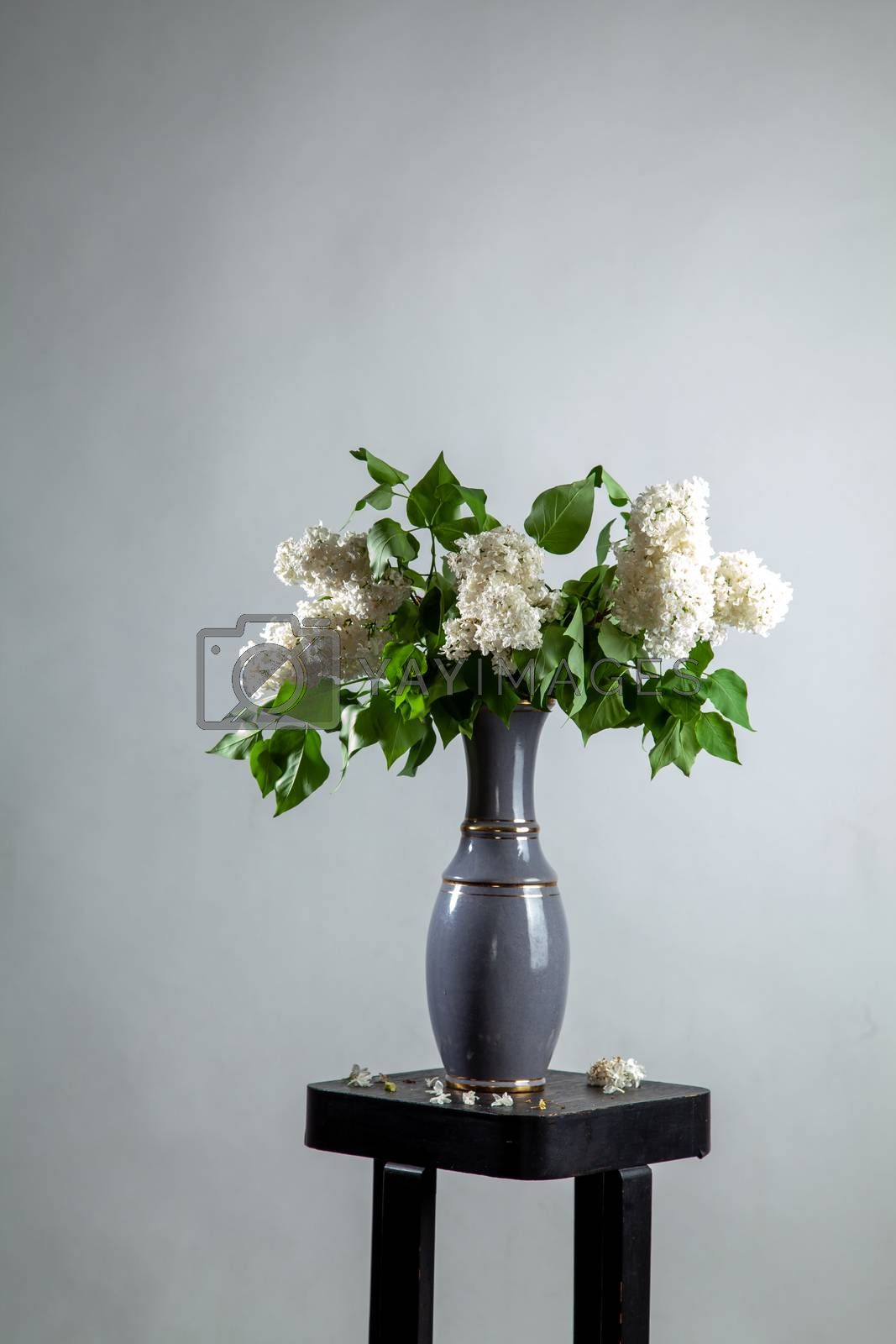 White branches of lilac in vase on gray background. Spring branch of blooming lilac on the table with gray background. Fallen lilac flowers on the table.