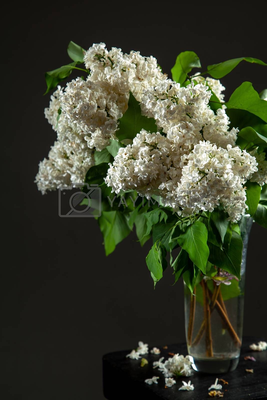 White branches of lilac in glass vase on dark background. Spring branch of blooming lilac on the black table with dark background. Fallen lilac flowers on the table.