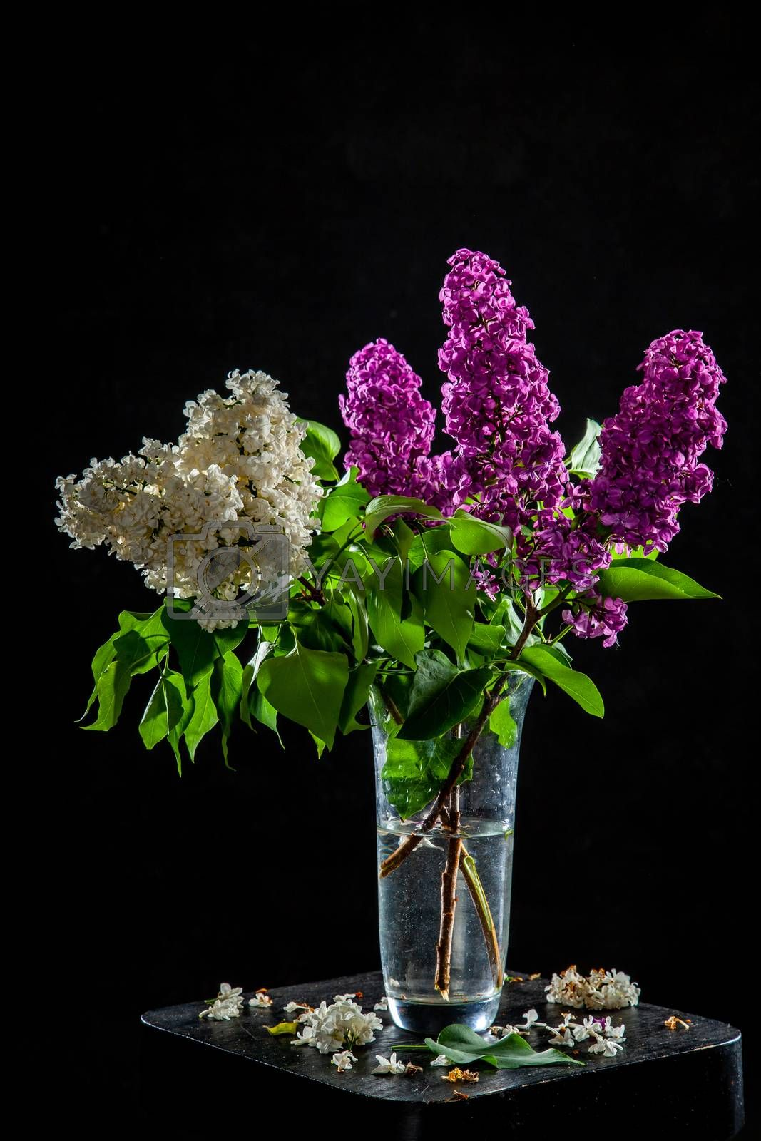 Branches of white and purple  lilac in glass vase on black background. Spring branch of blooming lilac on the table with black background. Fallen lilac flowers on the table.