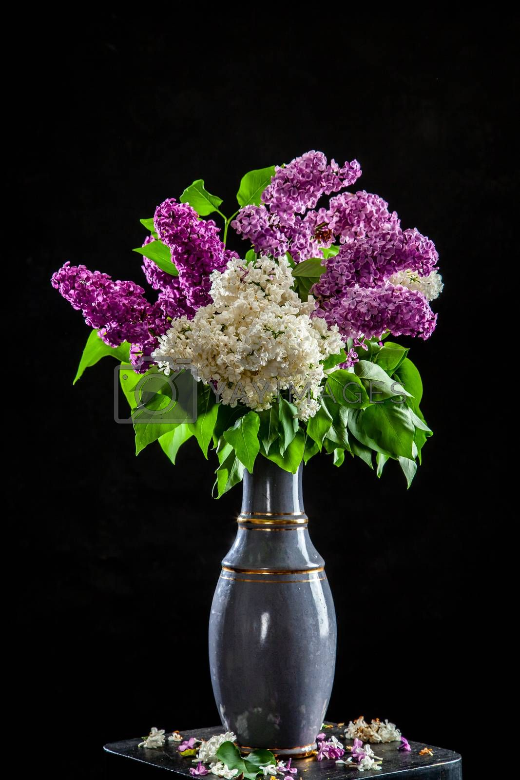 Branches of white and purple lilac in vase on black background. Spring branch of blooming lilac on the table with black background. Fallen lilac flowers on the table.