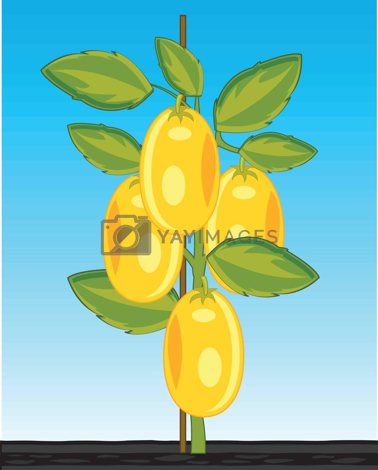 Vector illustration of the bush ripe tomato sort yellow in ground