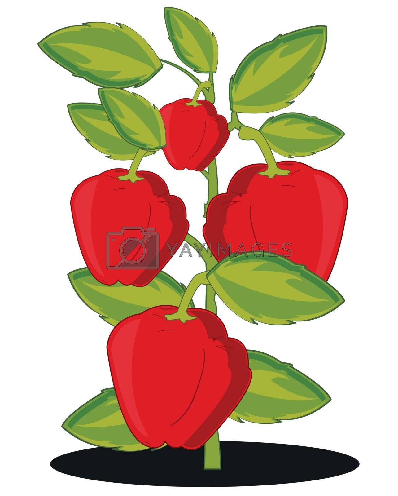 Vector illustration of the harvest red pepper on white background