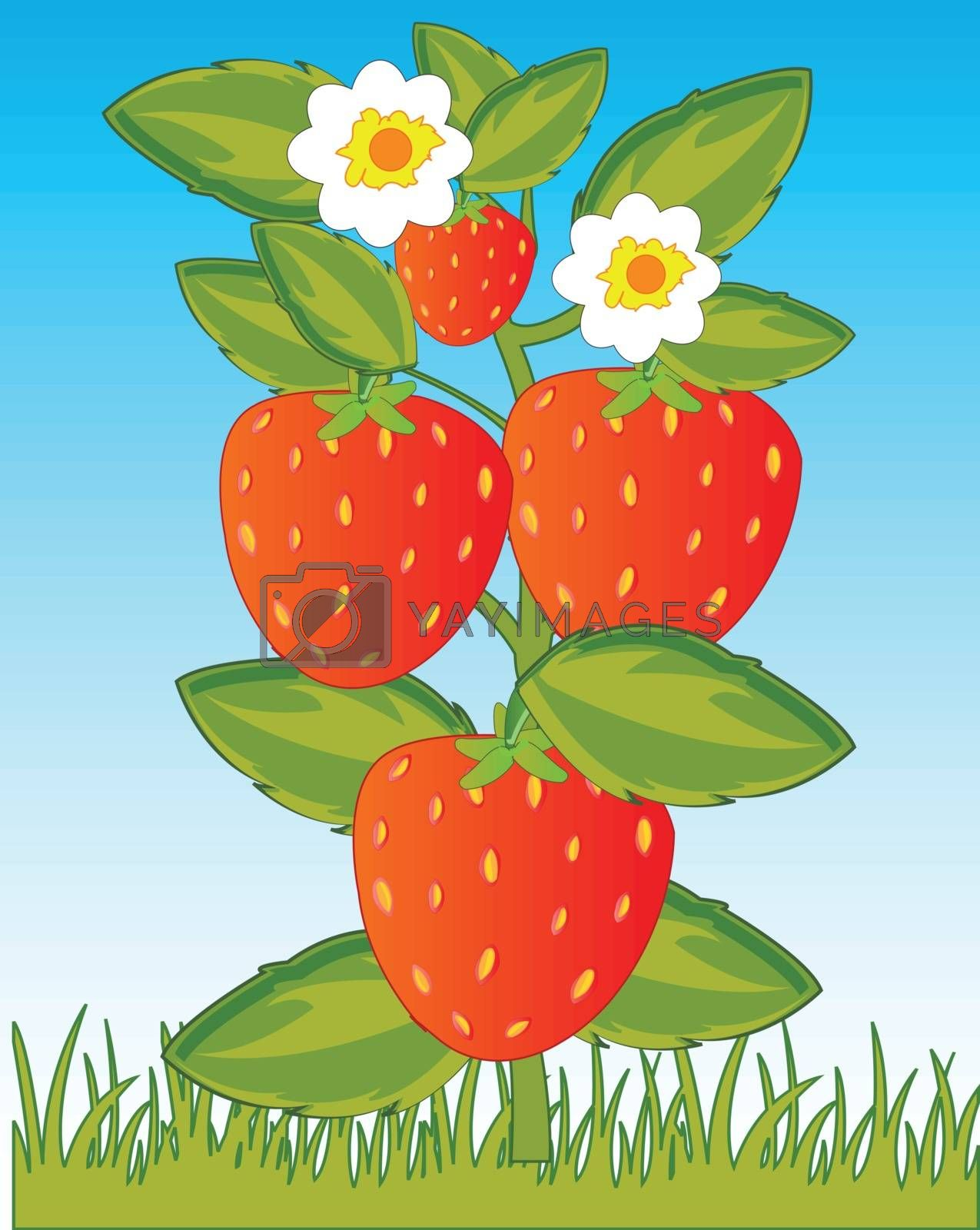 Vector illustration of the ripe berry strawberries in herb