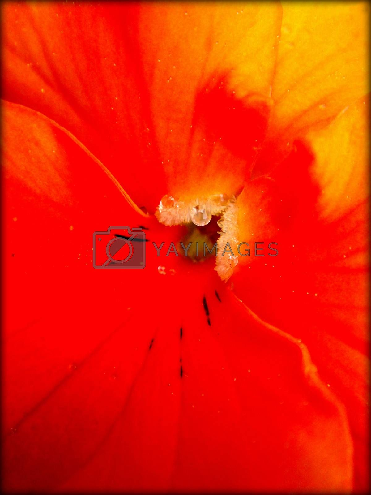 Flower macro beautiful background and wallpapers in high quality prints products