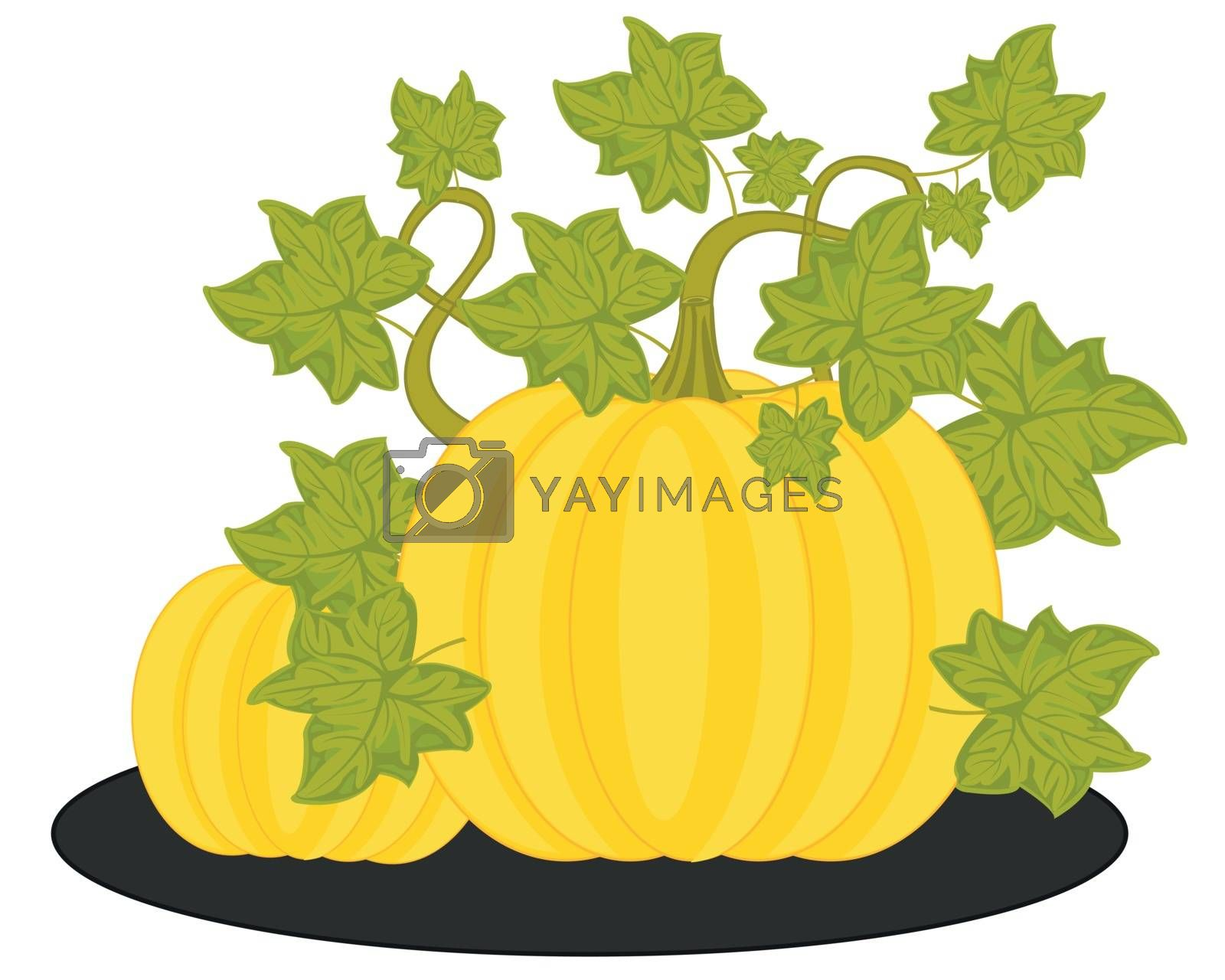 Vector illustration of the ripe vegetable melon in garden