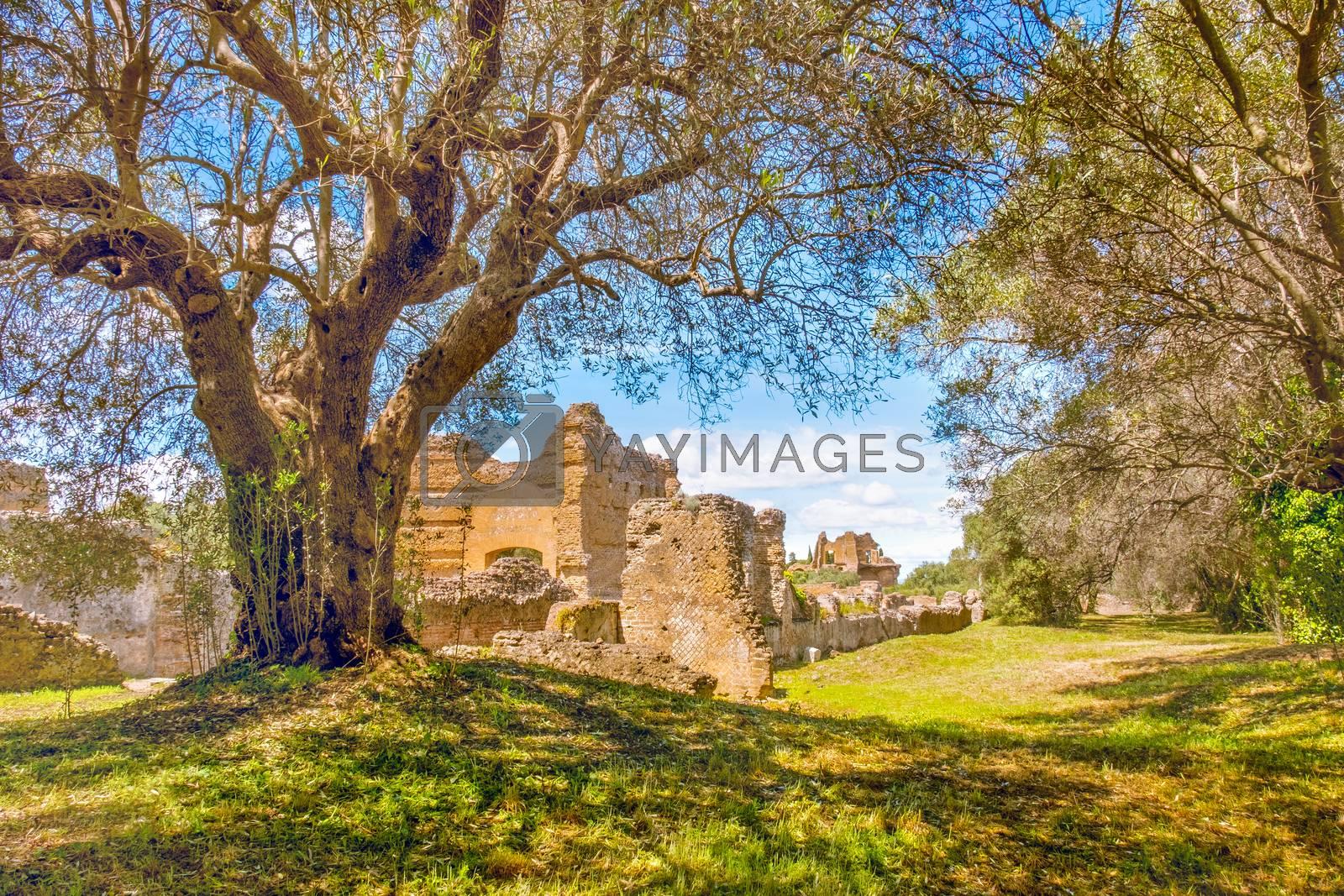 Italian countryside ancient ruins tree branches on sunny day in Tivoli .