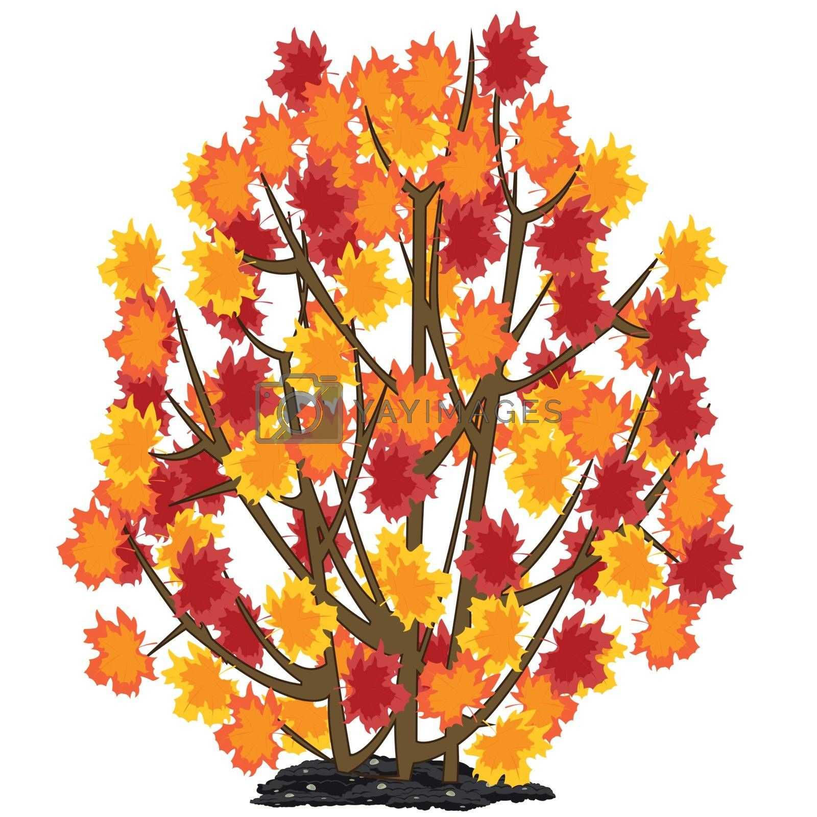 Vector illustration of the autumn bush with yellow foliage